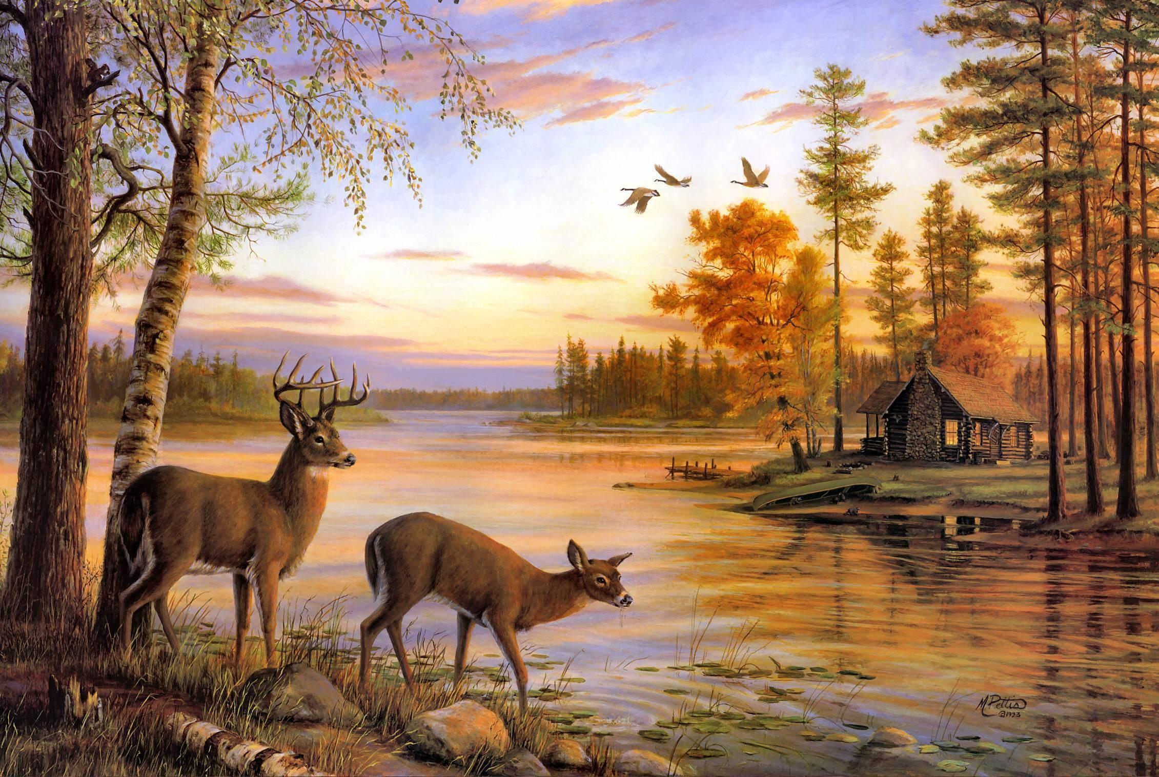 Whitetail Deer Wallpaper ·① WallpaperTag