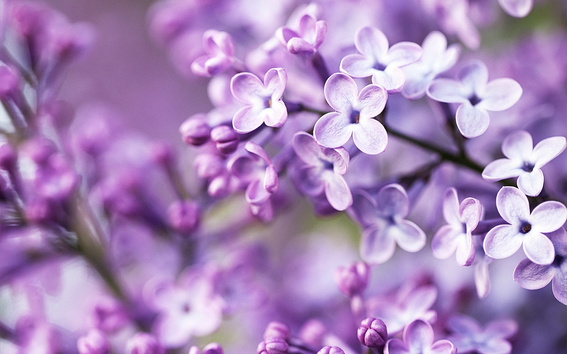 Purple Flowers Wallpapers Wallpapertag