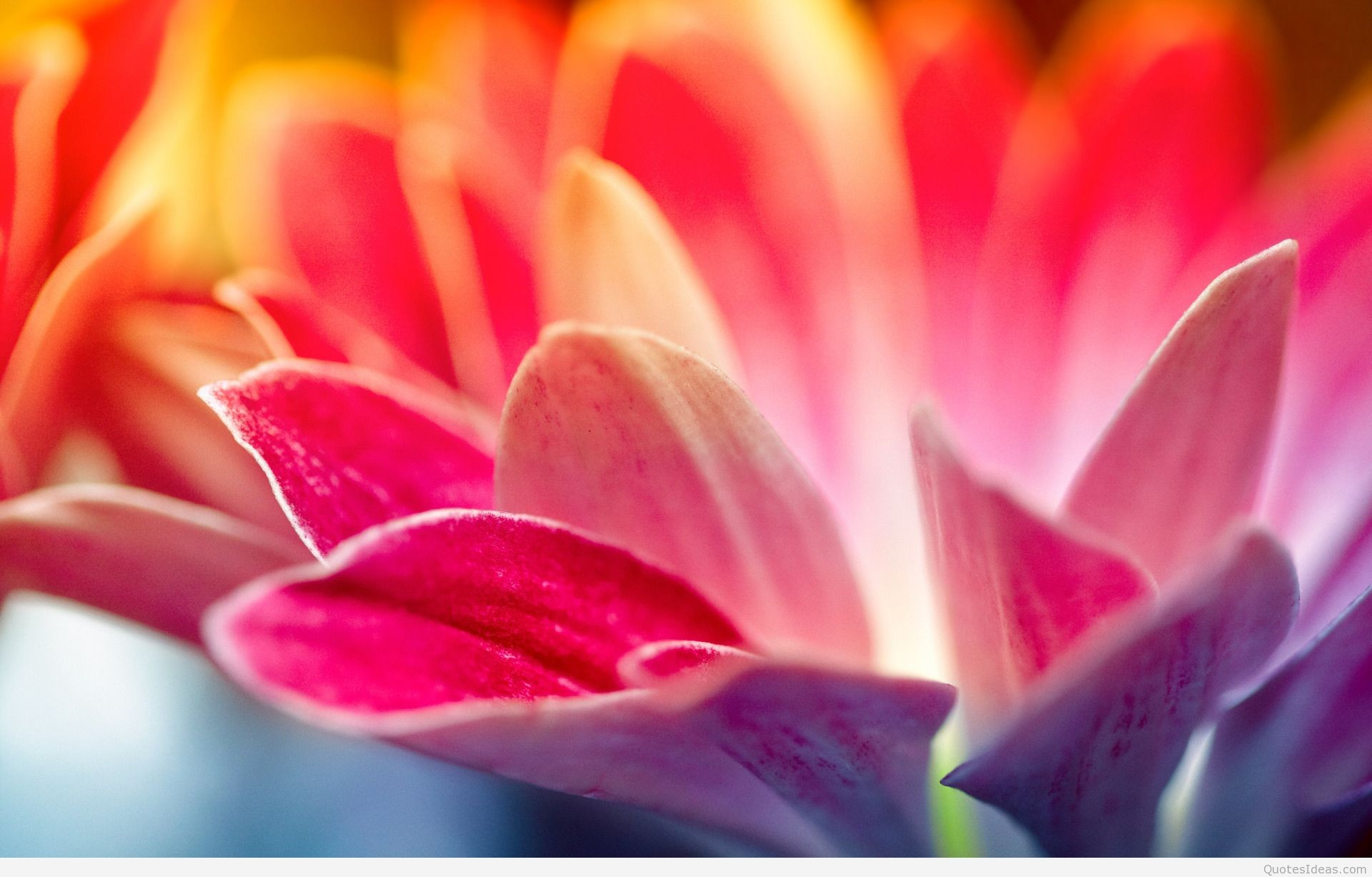44+ Spring wallpapers ·① Download free HD wallpapers for ...
