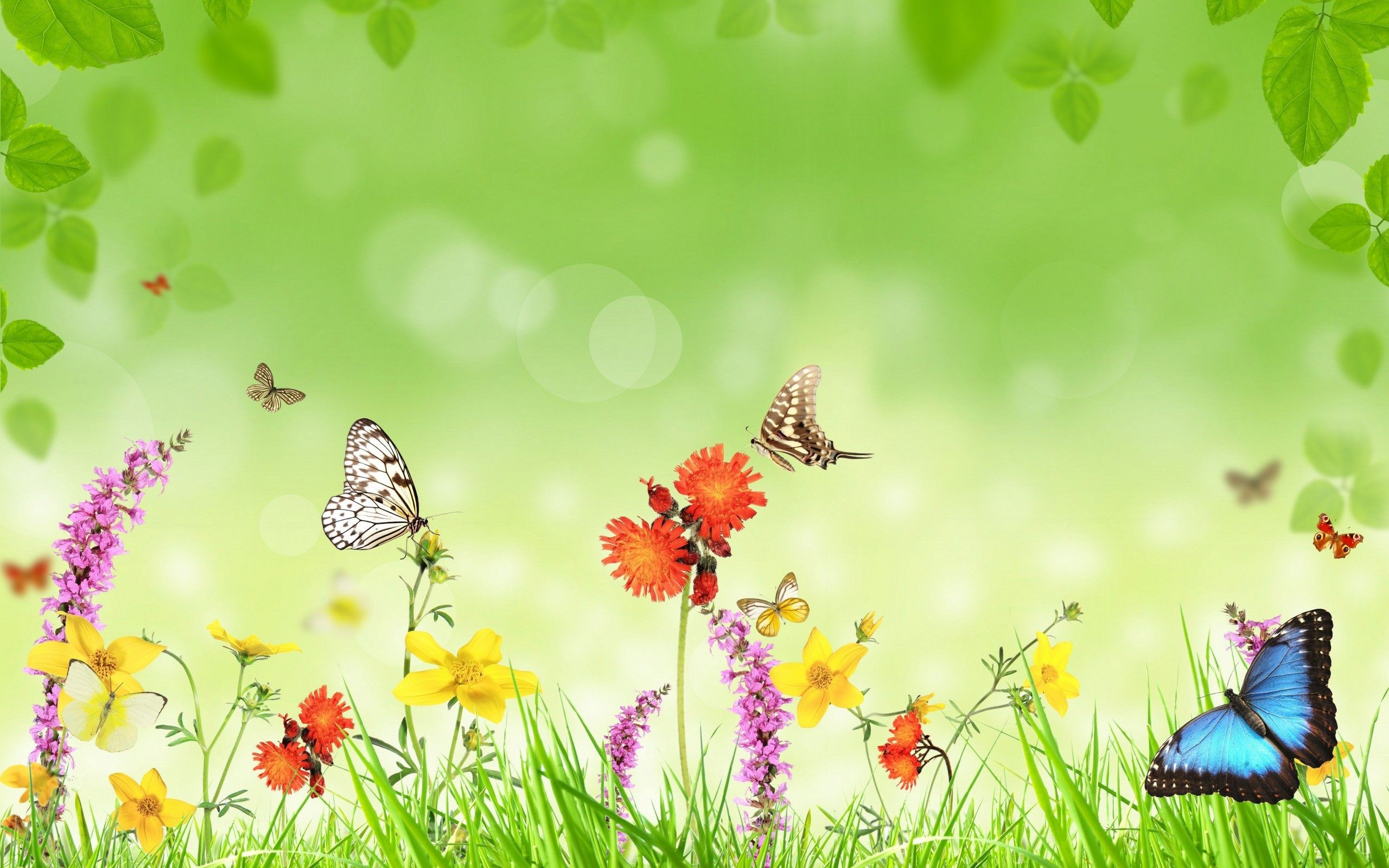 Butterfly wallpaper ·① Download free beautiful full HD ...
