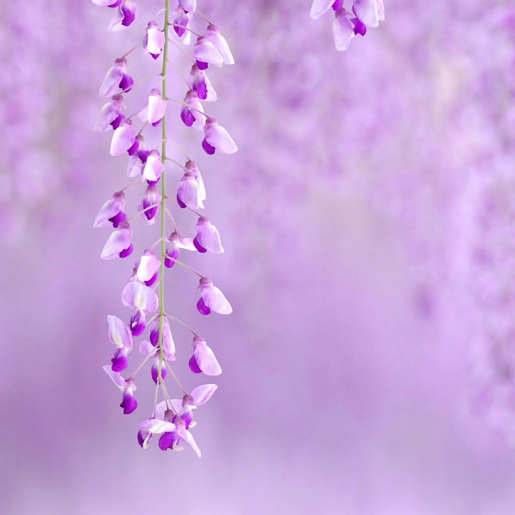 Light Purple Background ·① Download Free Beautiful