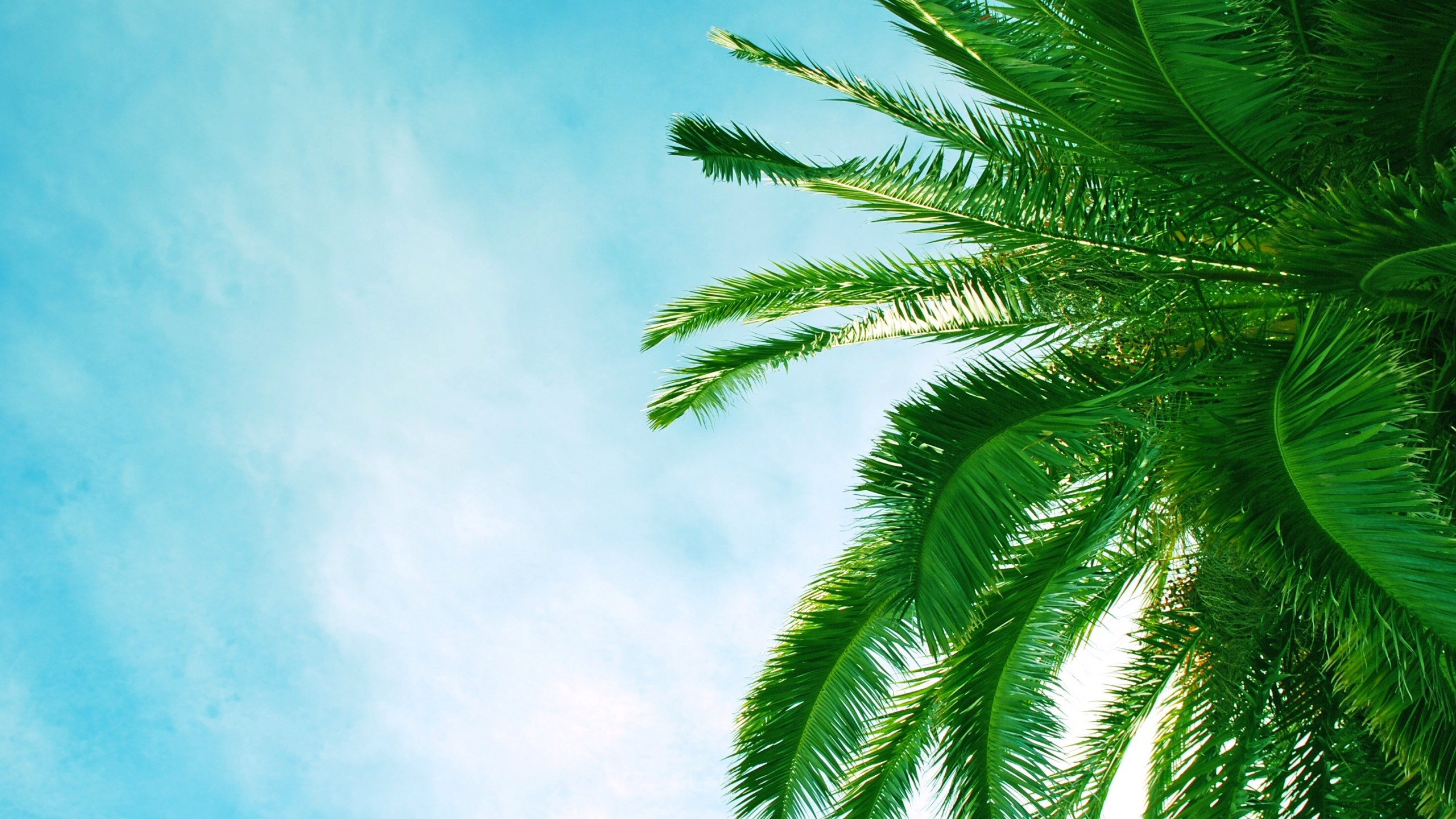 Palm Tree Background ·① Download Free HD Backgrounds For