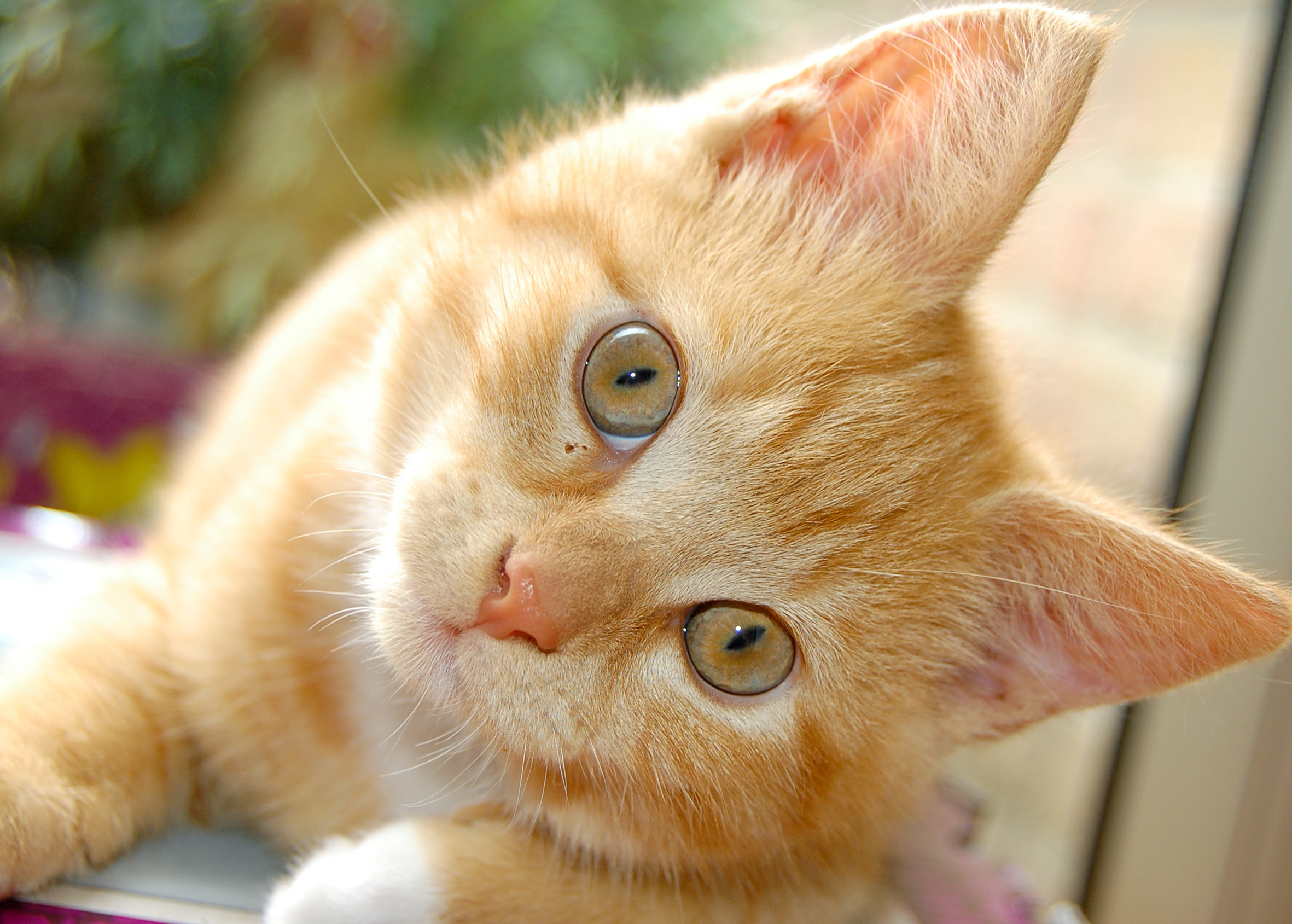 Cute Animals Wallpapers ·①