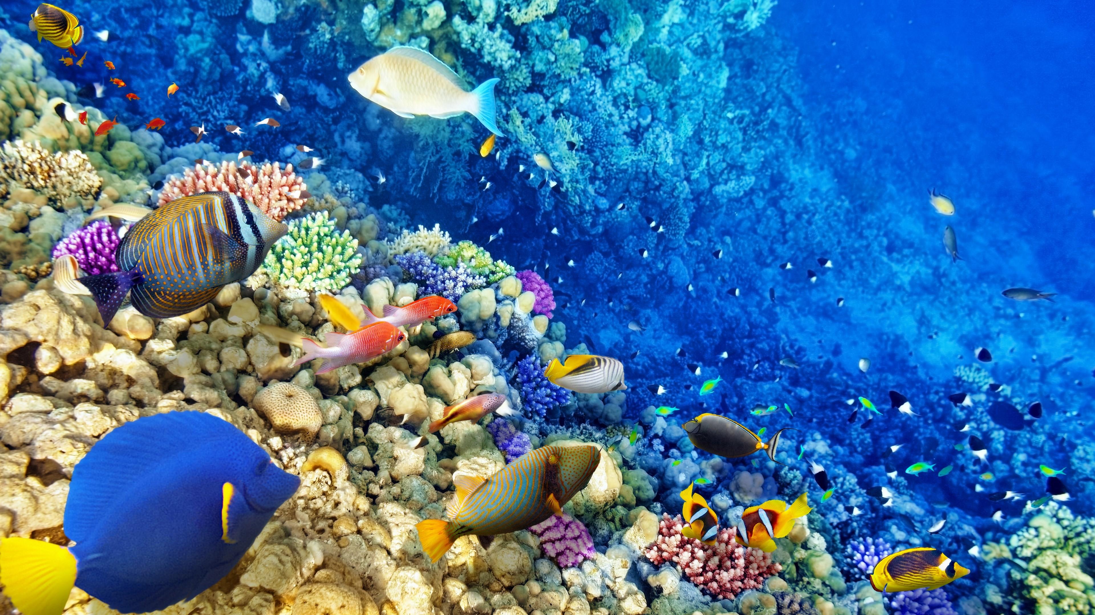 Яркие краски подводного мира  № 618925 без смс