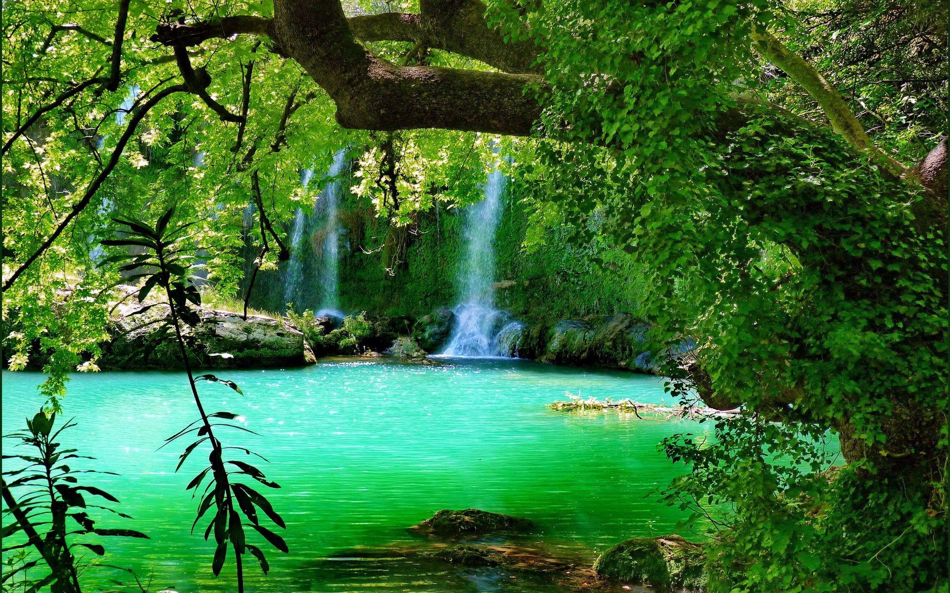 Rainforest background ·① Download free beautiful full HD ...