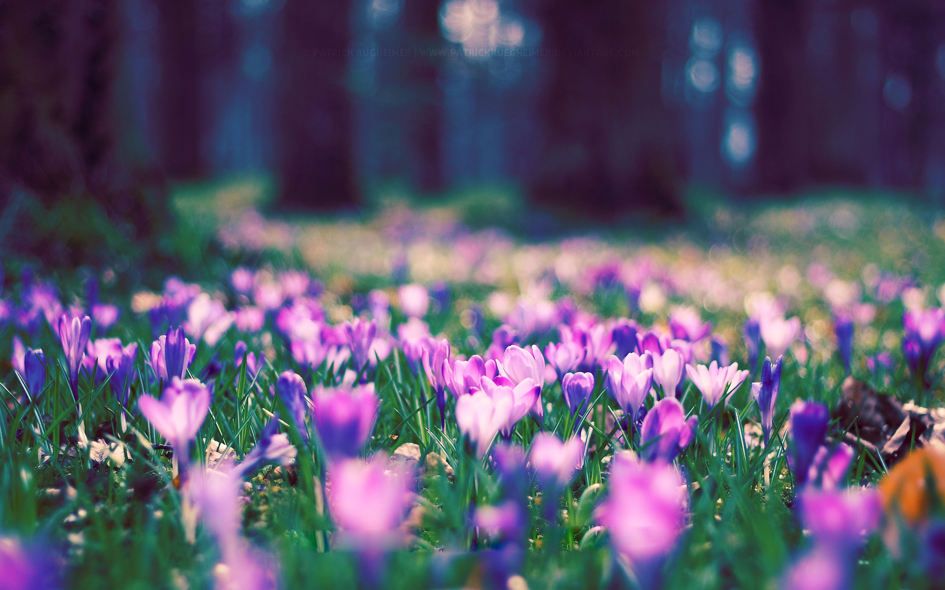 Desktop Wallpaper Spring Flowers