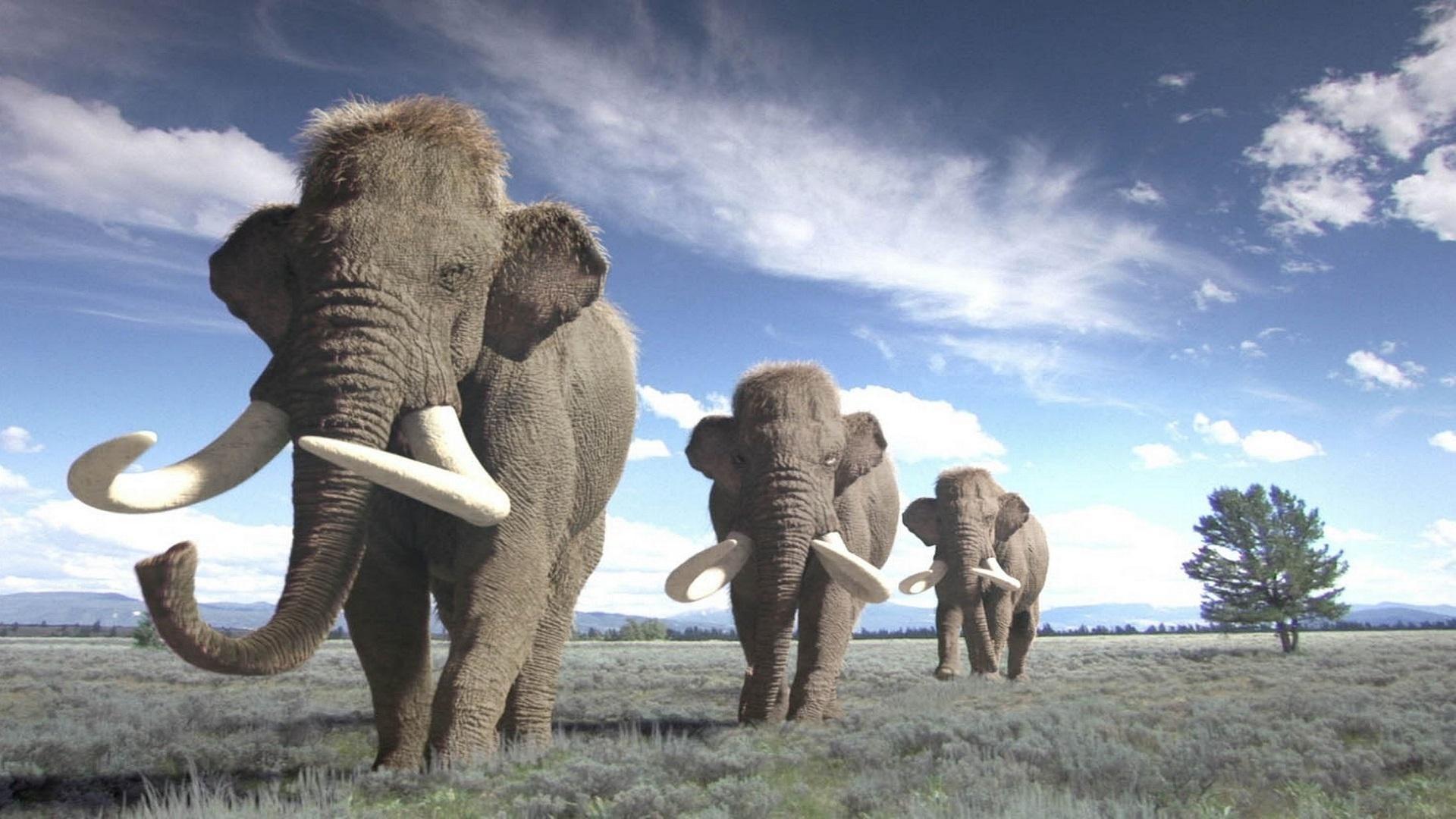 Mammoth Wallpapers Wallpapertag