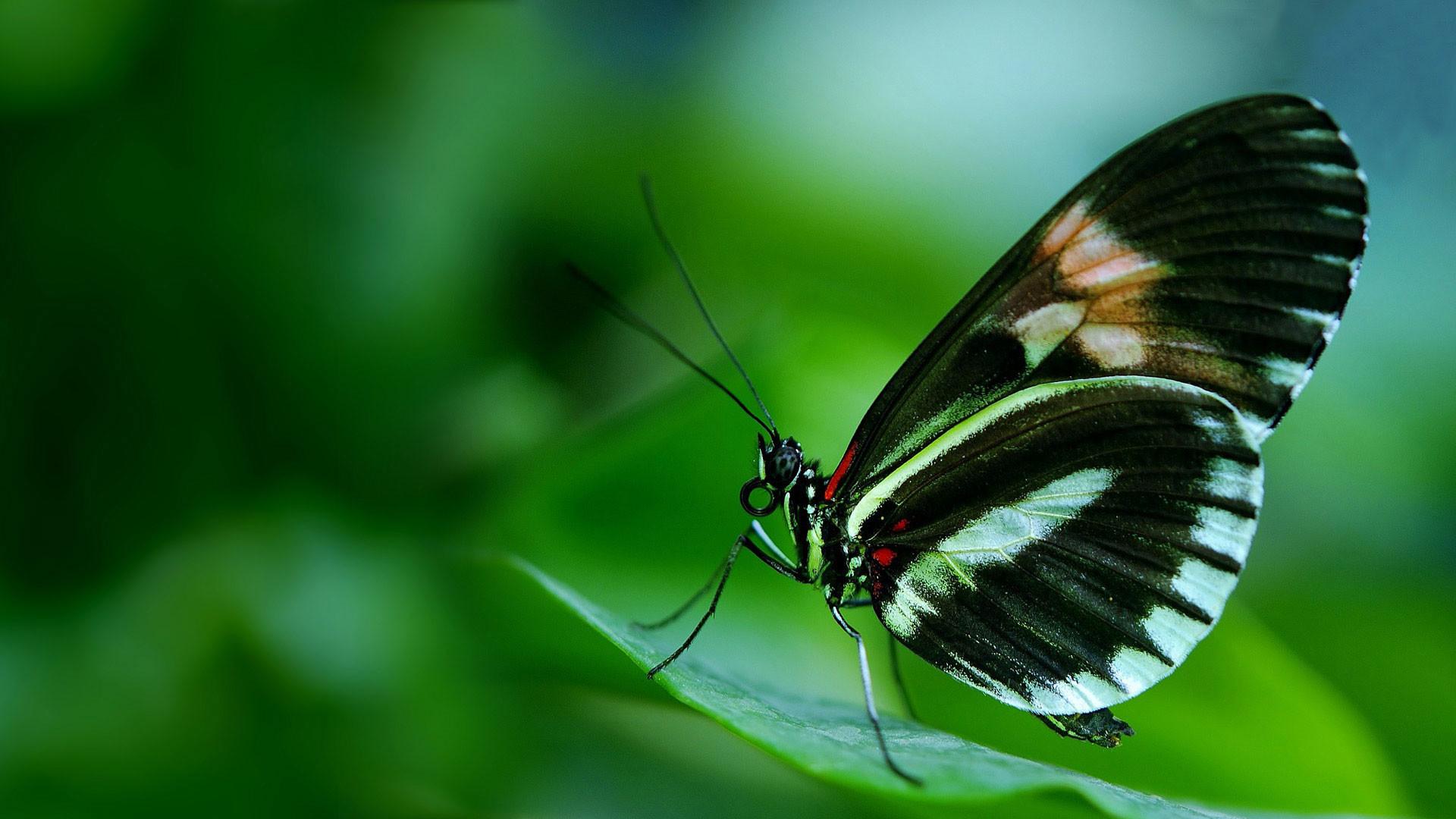 Black Butterfly Wallpaper ·① WallpaperTag