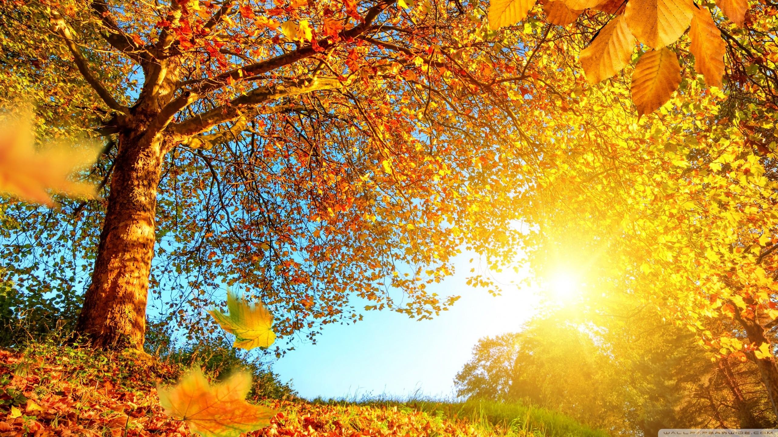 Autumn landscape wallpaper wallpapertag for Paesaggi autunnali per desktop