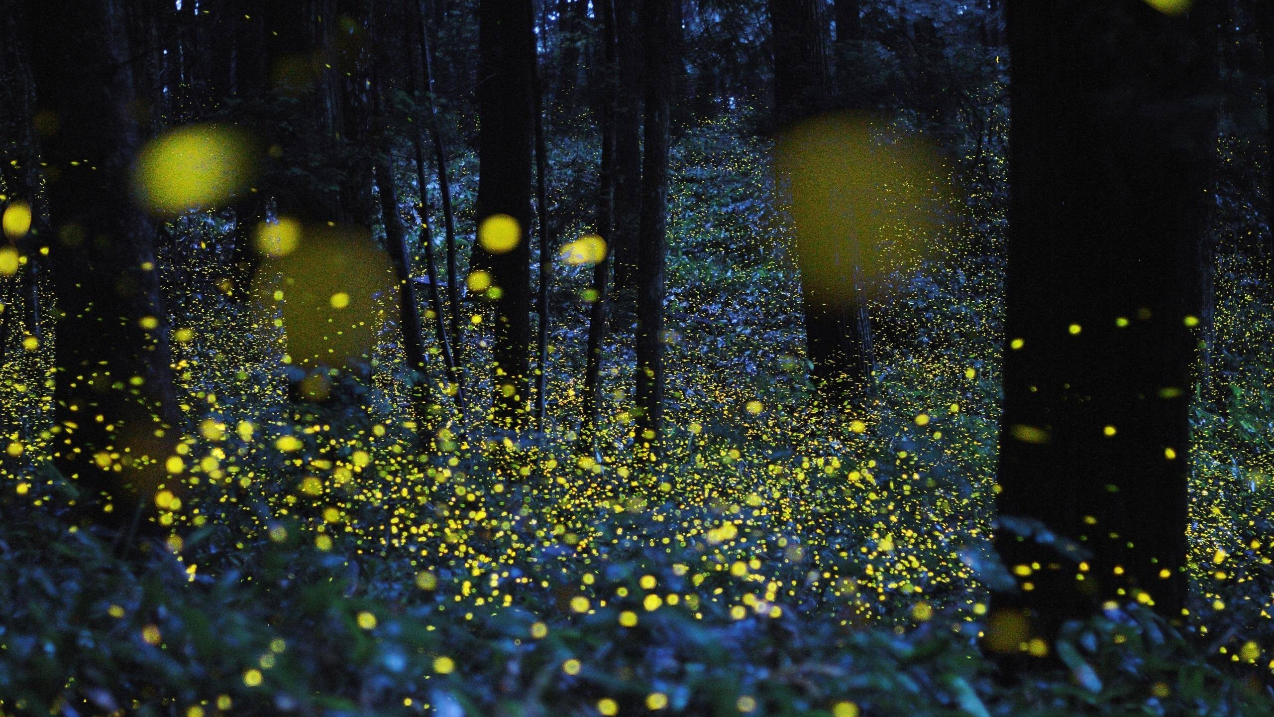 Fireflies Wallpaper