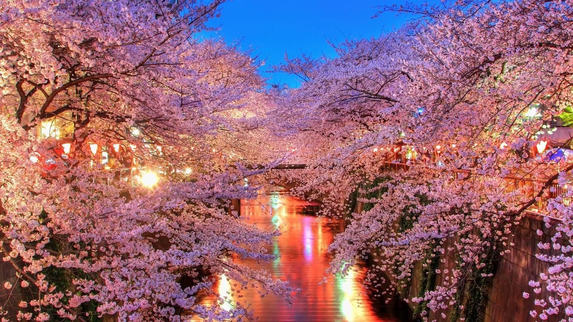 Cherry blossom desktop wallpaper wallpapertag - Sakura desktop ...