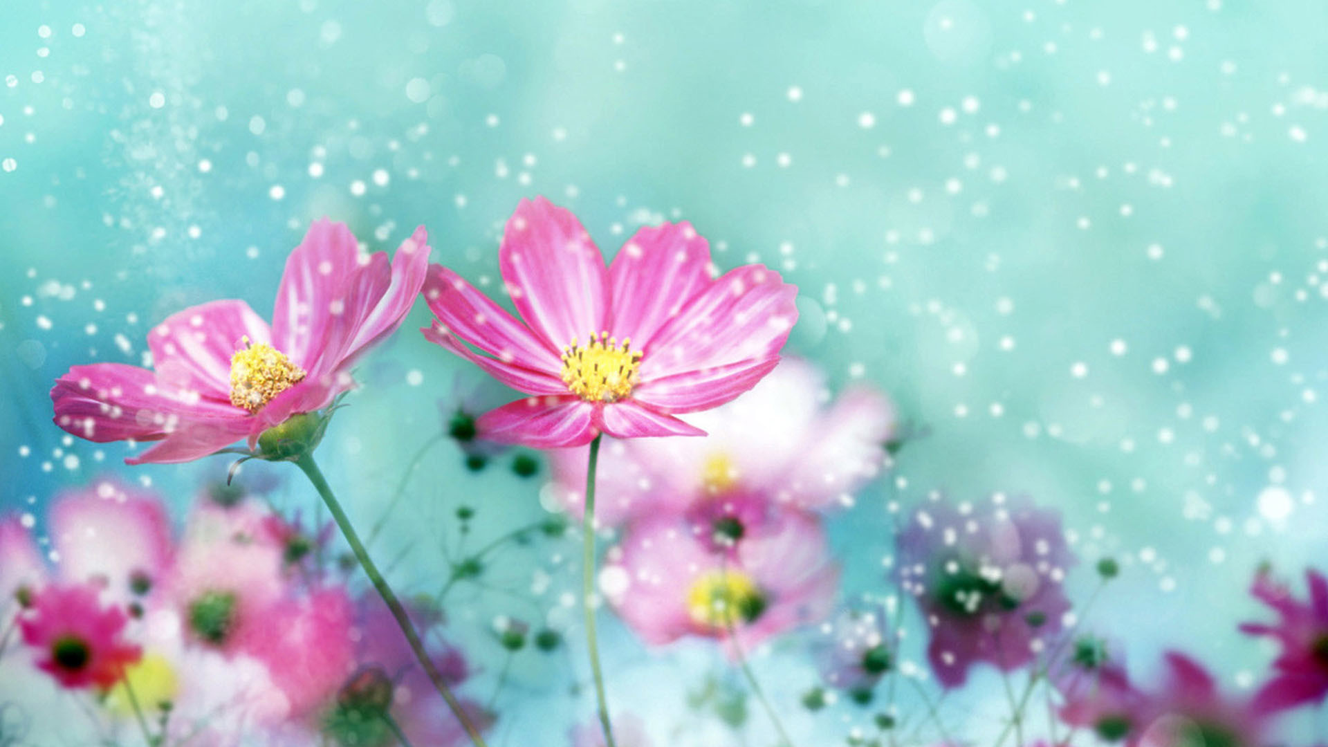 Pictures Of Flowers For Desktop Background ① Wallpapertag