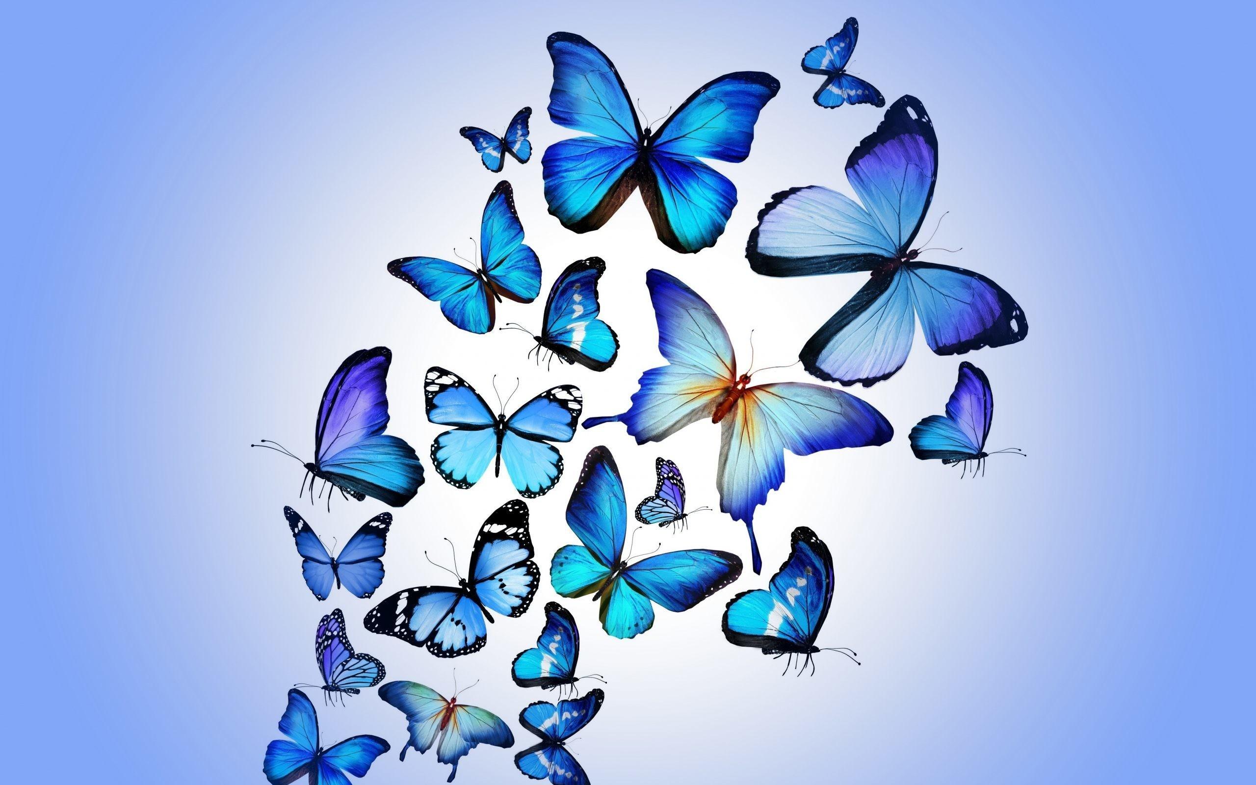 Beautiful Butterfly Wallpaper Wallpapertag
