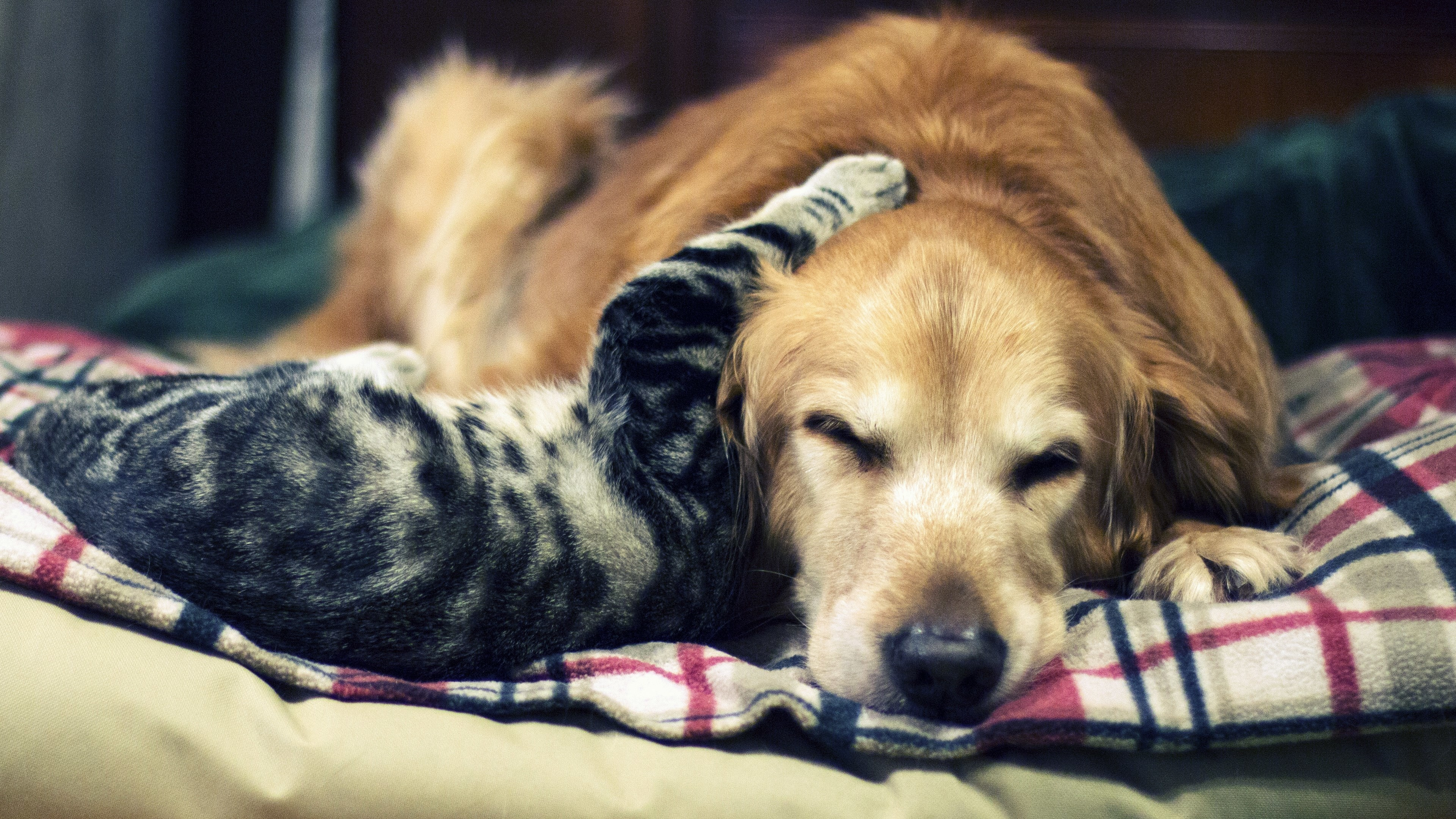 cat and dog wallpaper 183��