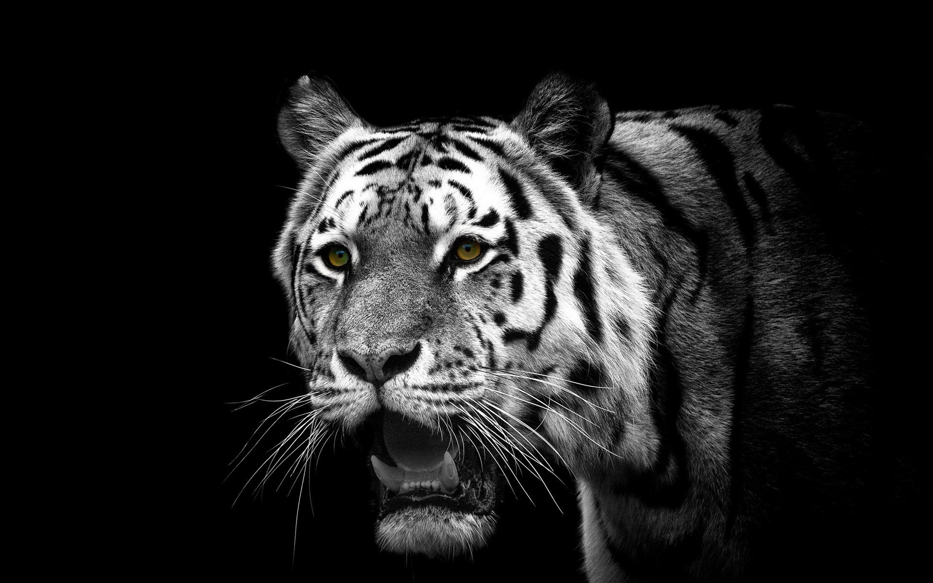 Tiger background ·① Download free beautiful full HD