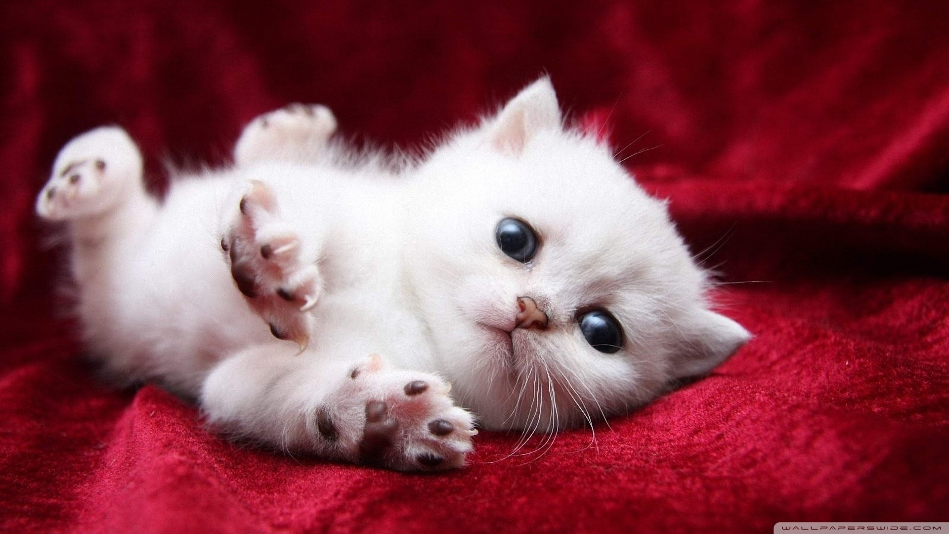 2560x1600 1920x1080 High Resolution Cute Baby Animal Kitty Cat Wallpaper Hd 17 Full