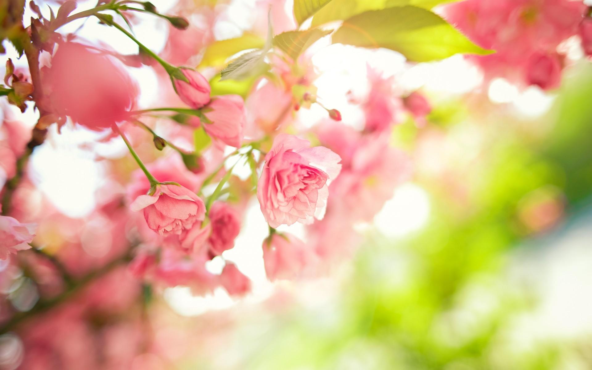 Spring Flowers Background ·â'