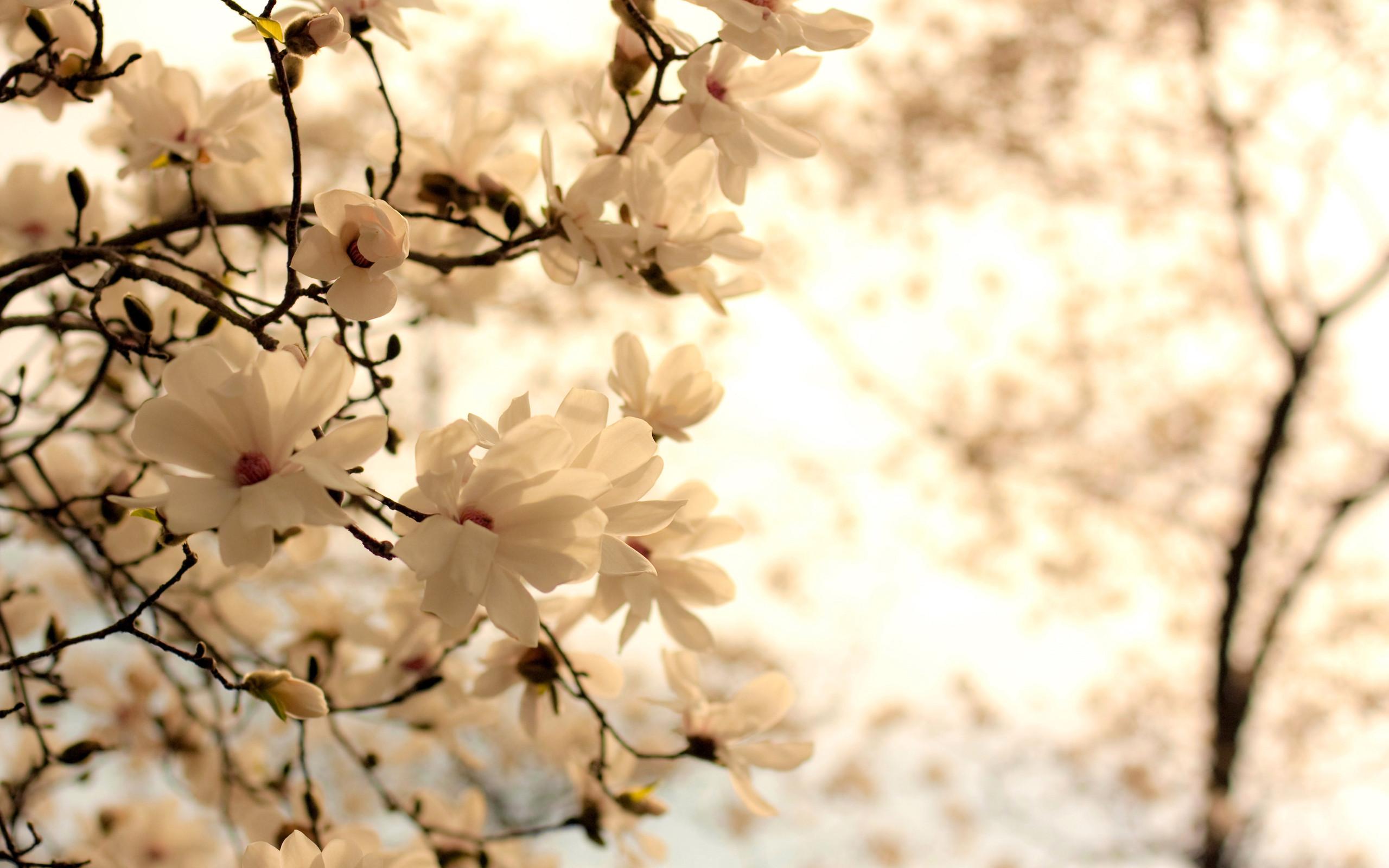 White Flower Wallpaper Wallpapertag