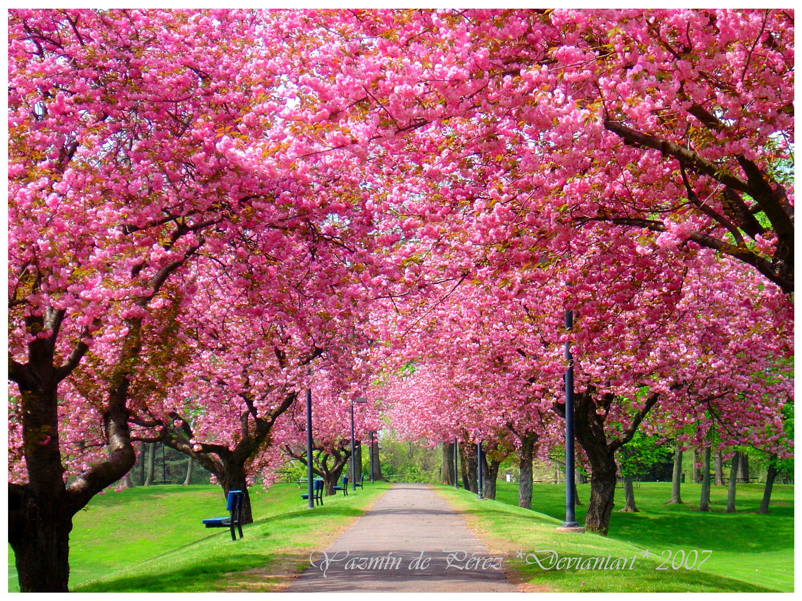 Spring season wallpapers wallpapertag - Free computer backgrounds for spring ...