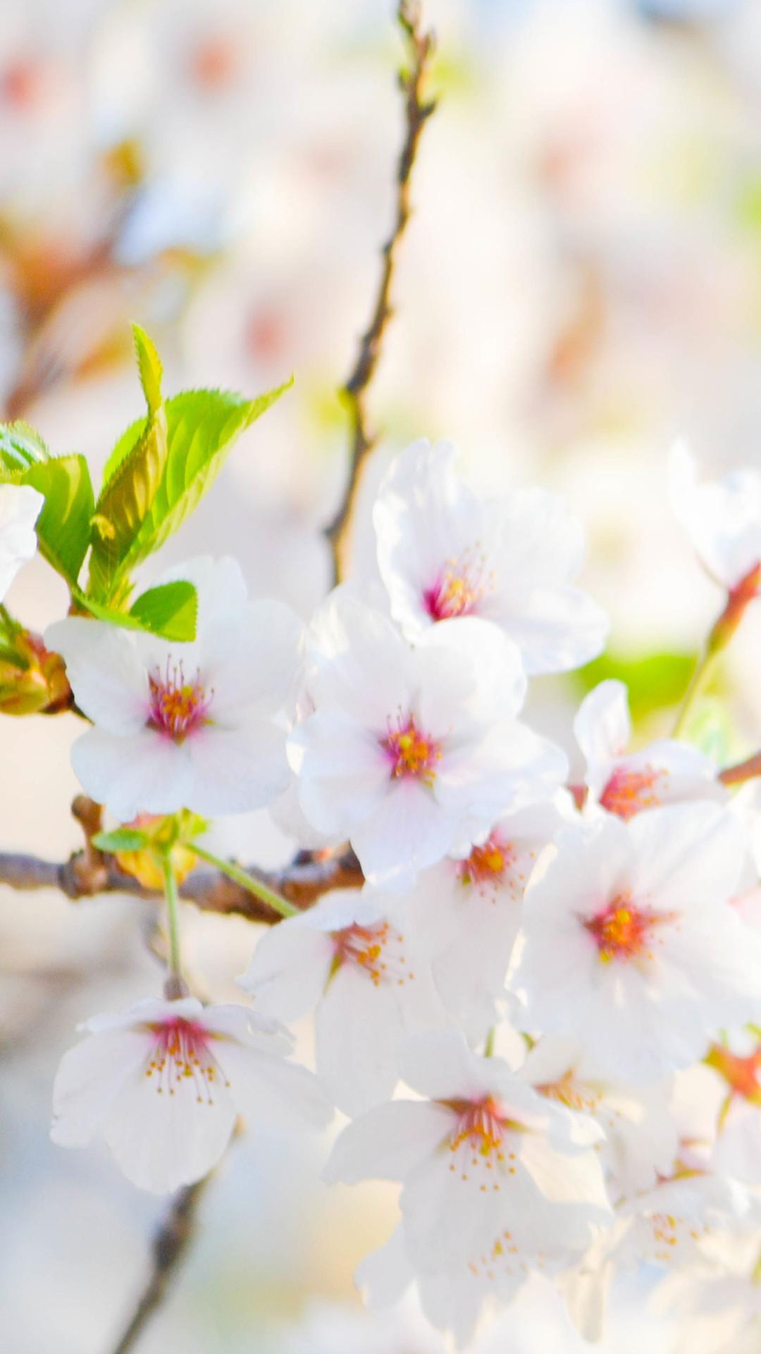 White Flower Wallpaper ·① WallpaperTag