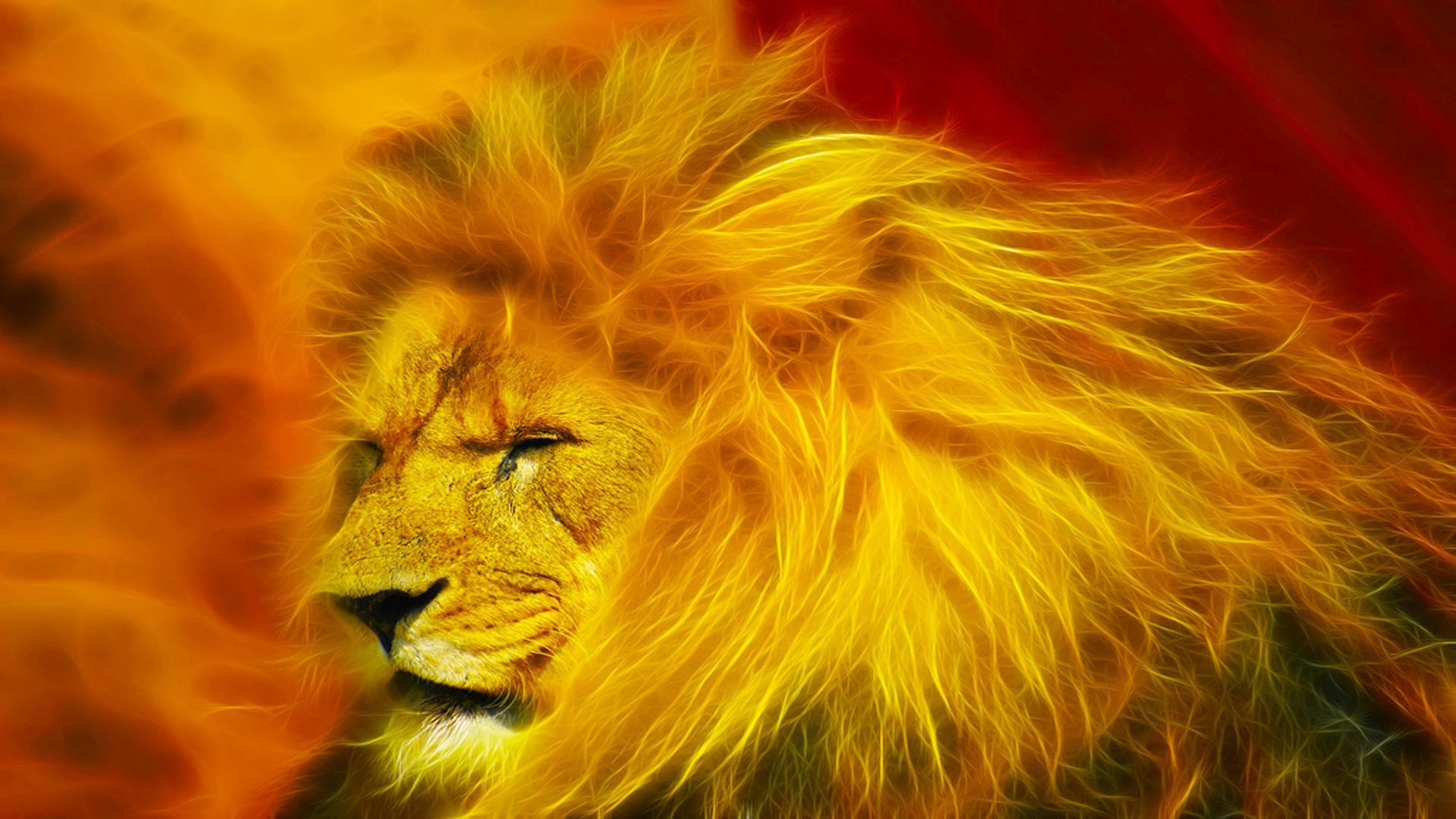 All About Lion Hd Wallpapers Free Wallpaper Downloads Lion Hd
