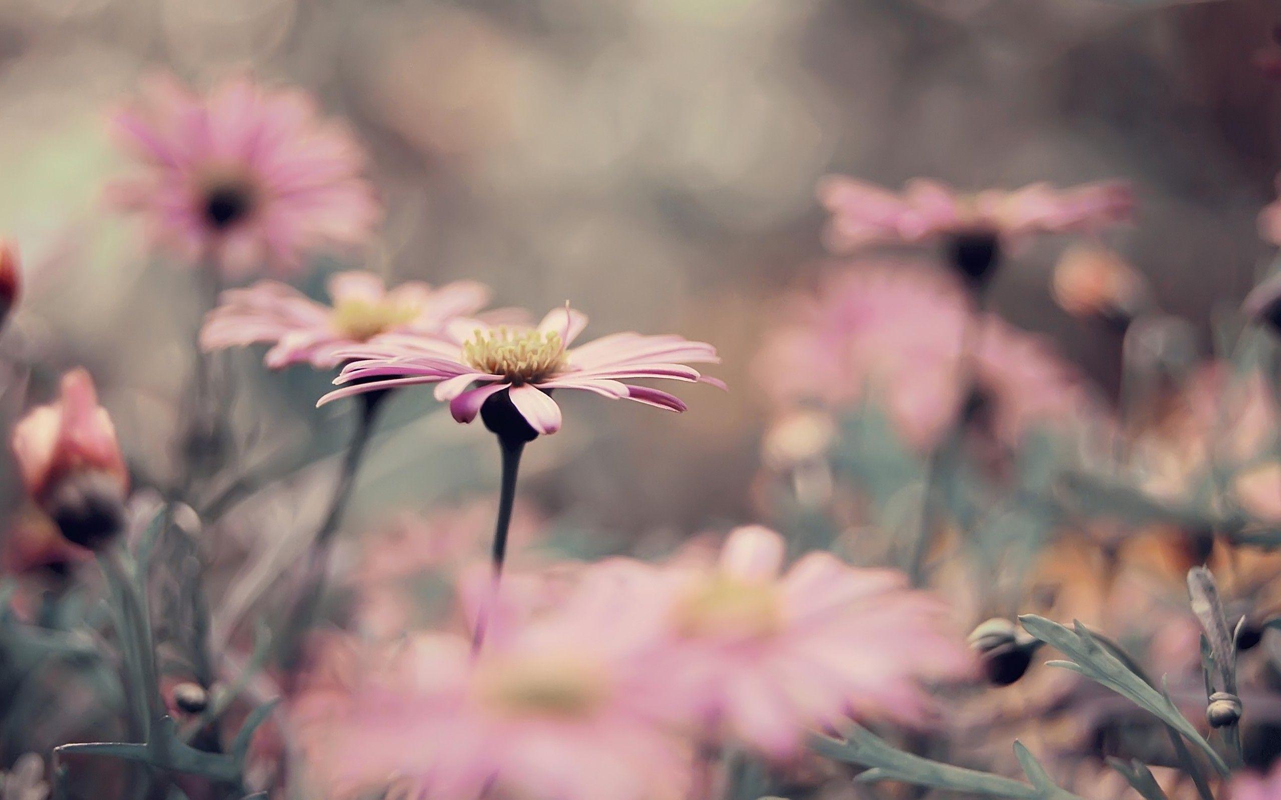 Vintage Flower Background 1 Download Free Amazing High Resolution
