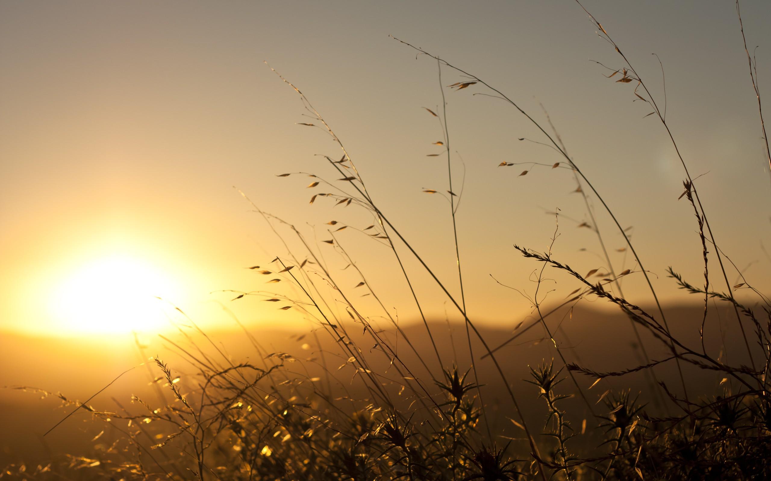 природа цветы трава мельниц восход солнце  № 2556715 бесплатно