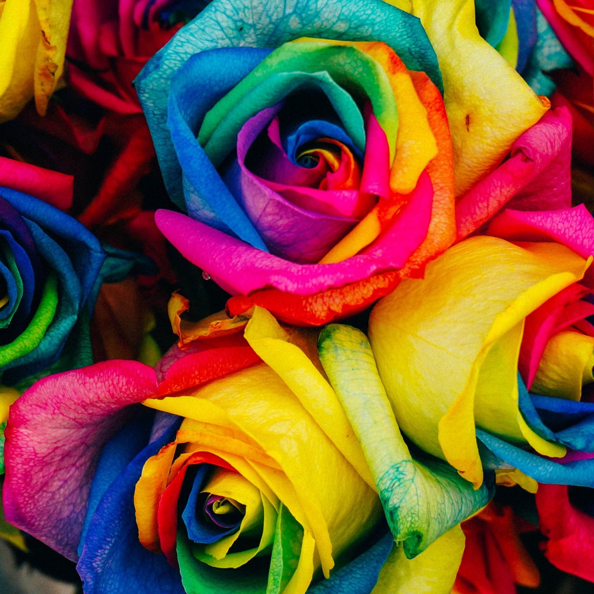 Rainbow Flower Wallpaper ·①