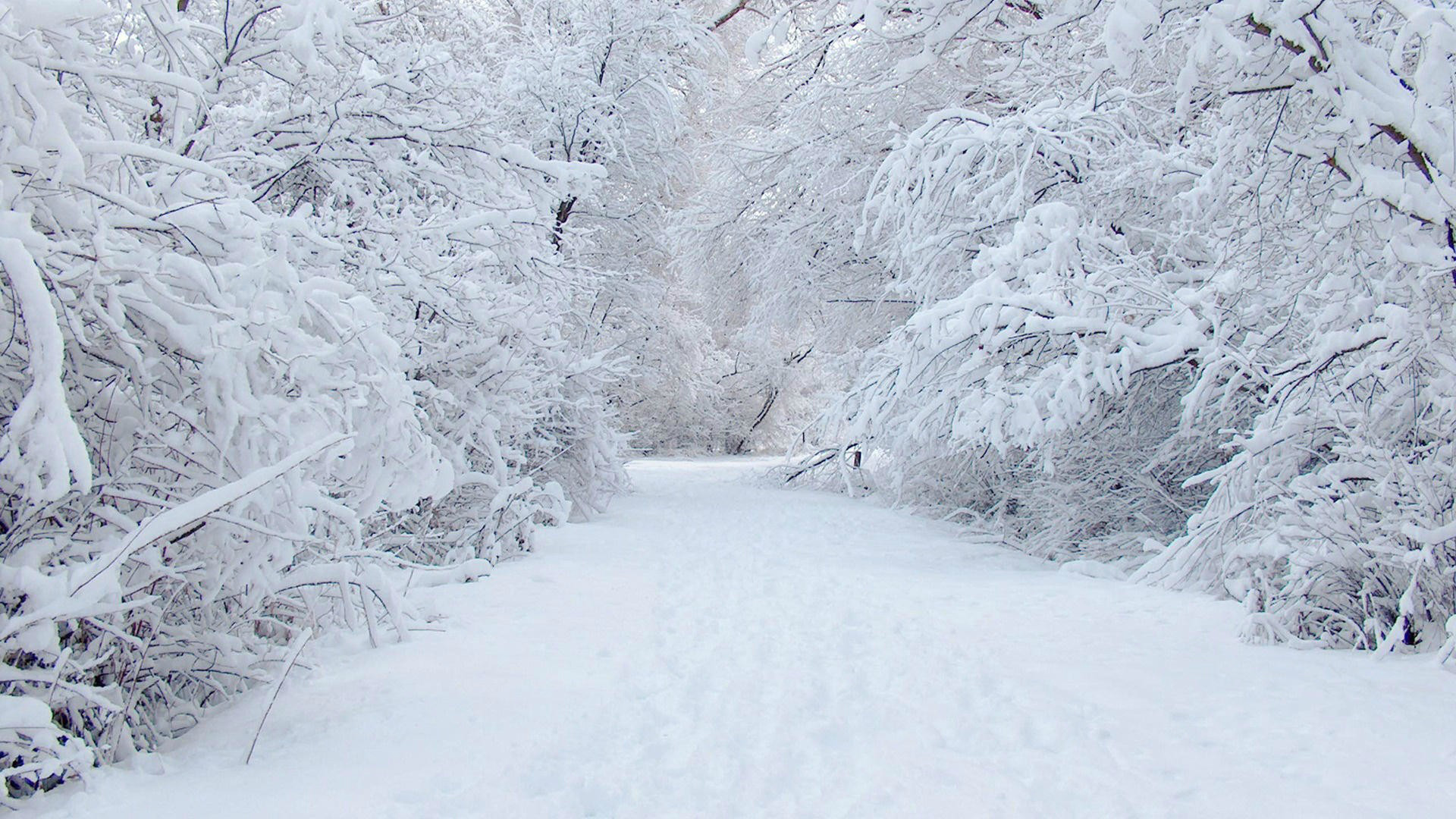 beautiful snow wallpapers  u00b7 u2460 wallpapertag