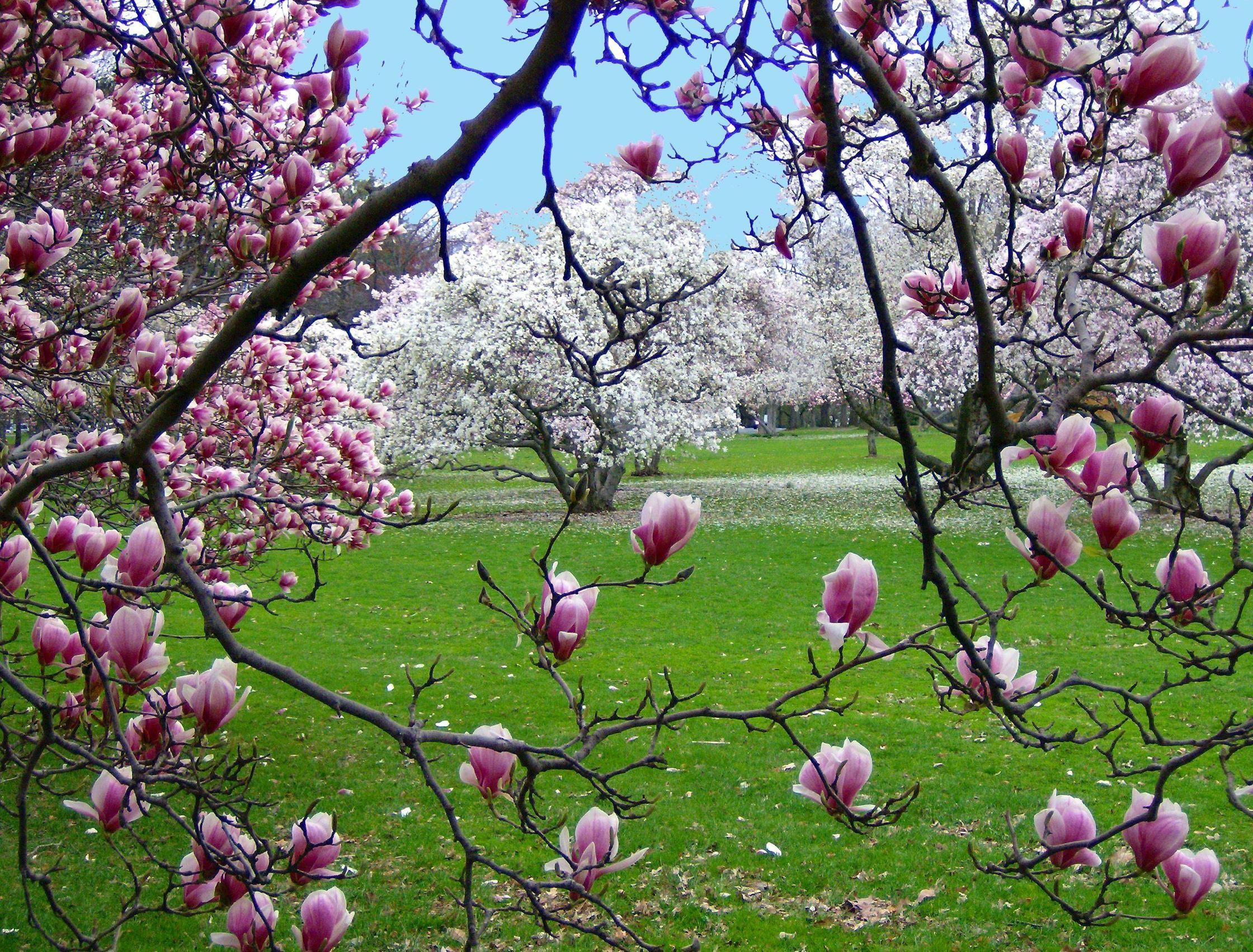 Spring scenes wallpaper wallpapertag - Backgrounds springtime ...