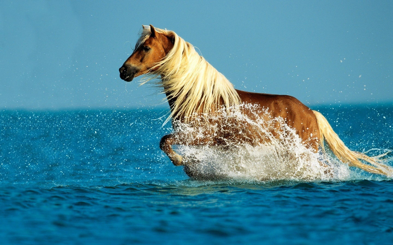 Cute Horse Wallpapers Wallpapertag