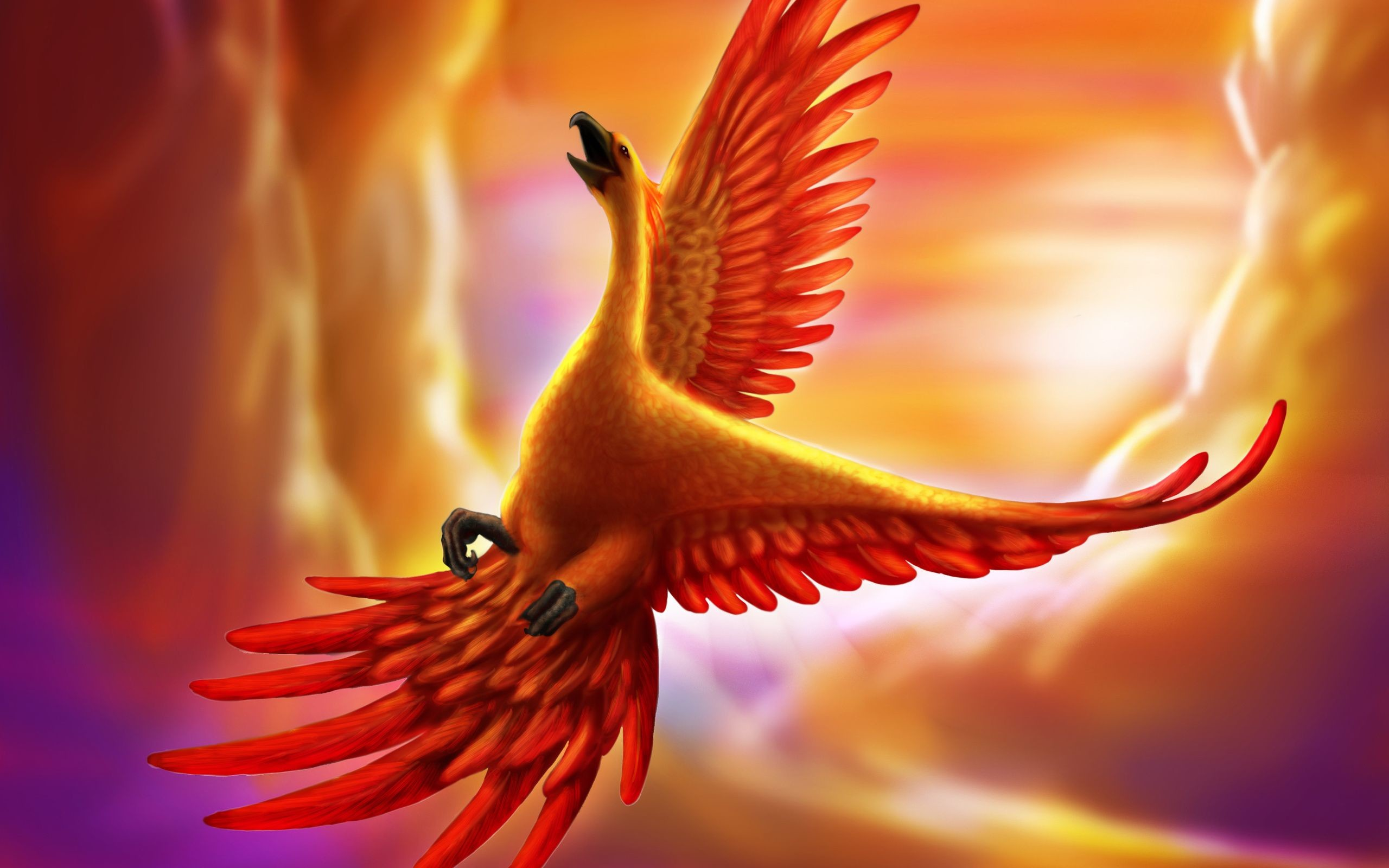 1920x1080 Phoenix Bird Flame Fire Abstract Hd Wallpapers High Definition Amazing Desktop For Windows Apple Mac Download Free