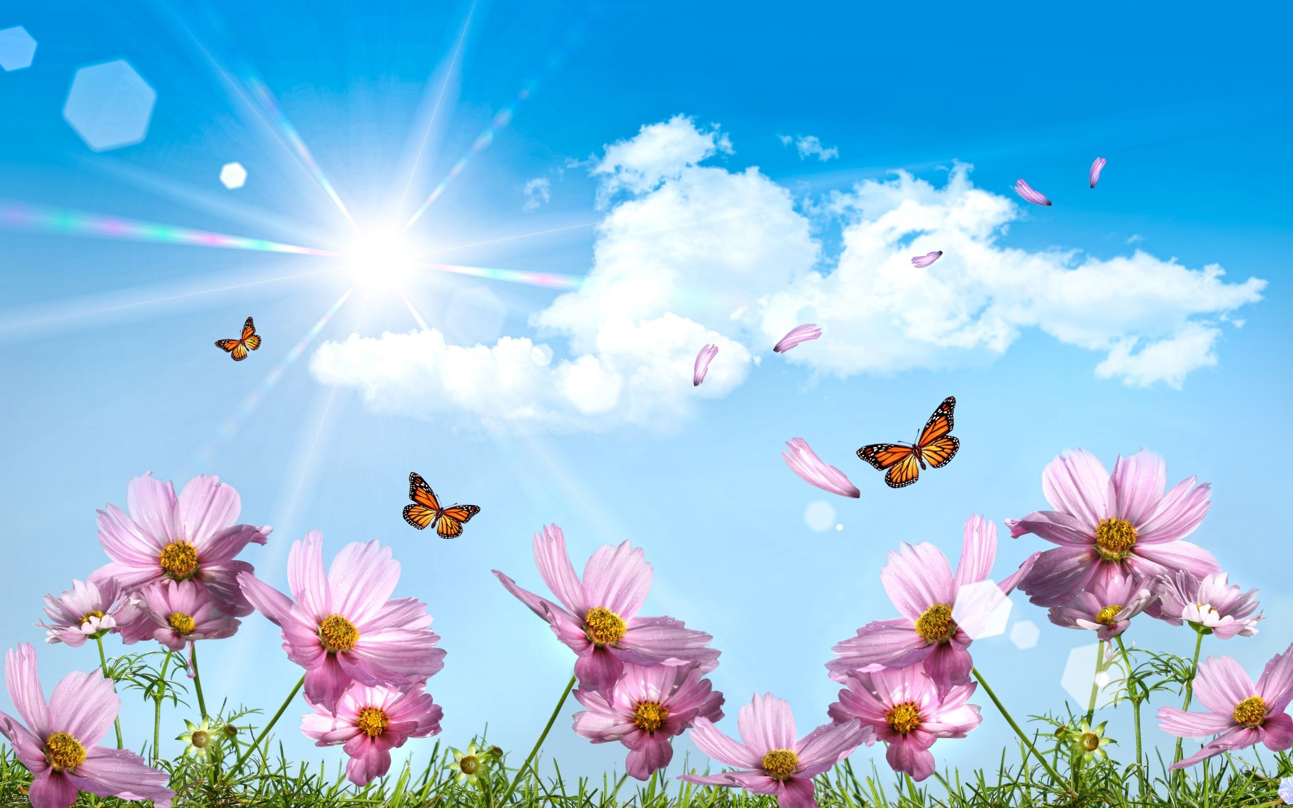 2560x1600 Butterflies Desktop Wallpapers
