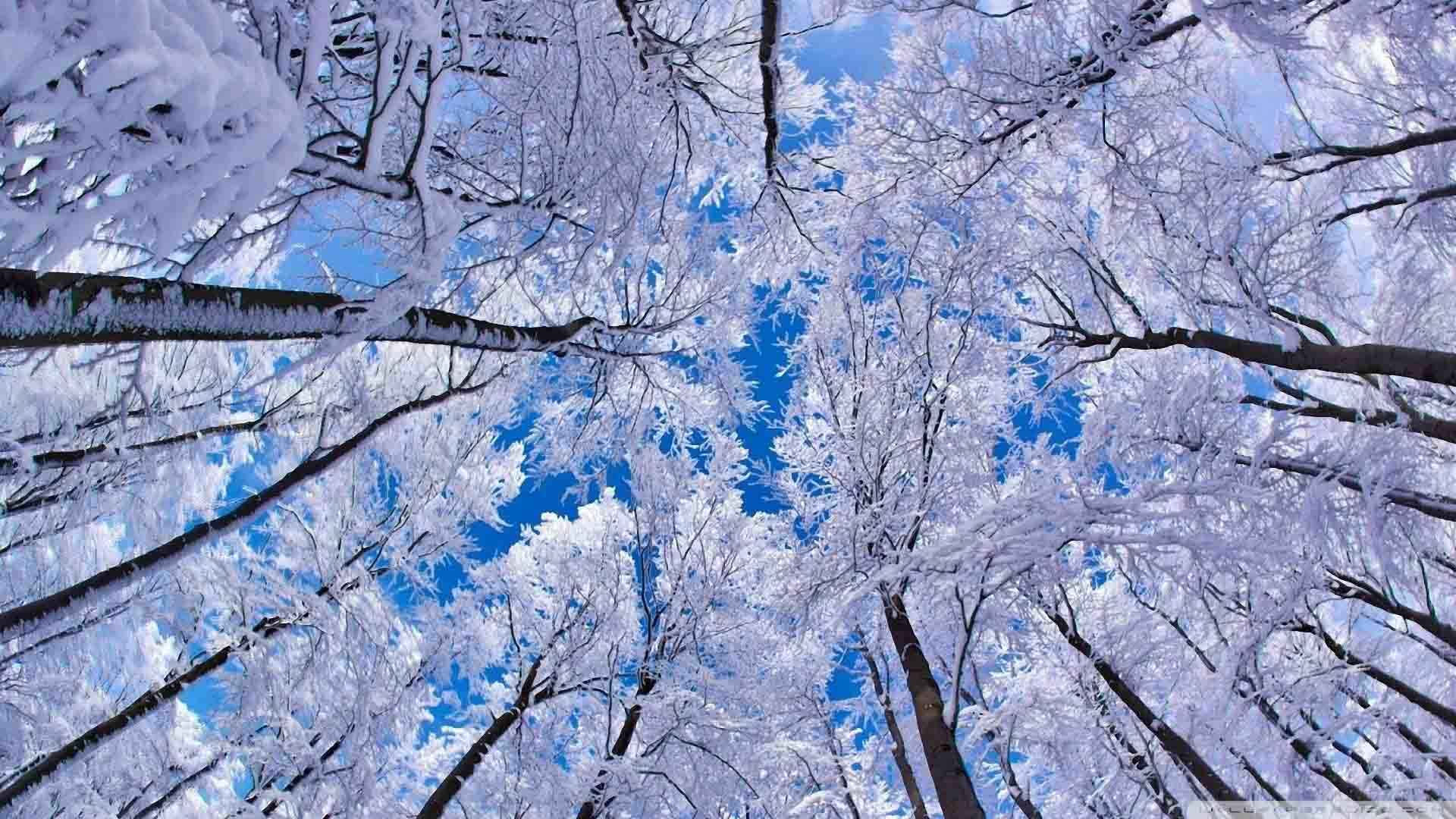 Wallpaper Scenes Gorgeous Desktop Wallpaper Winter Scenes ·①