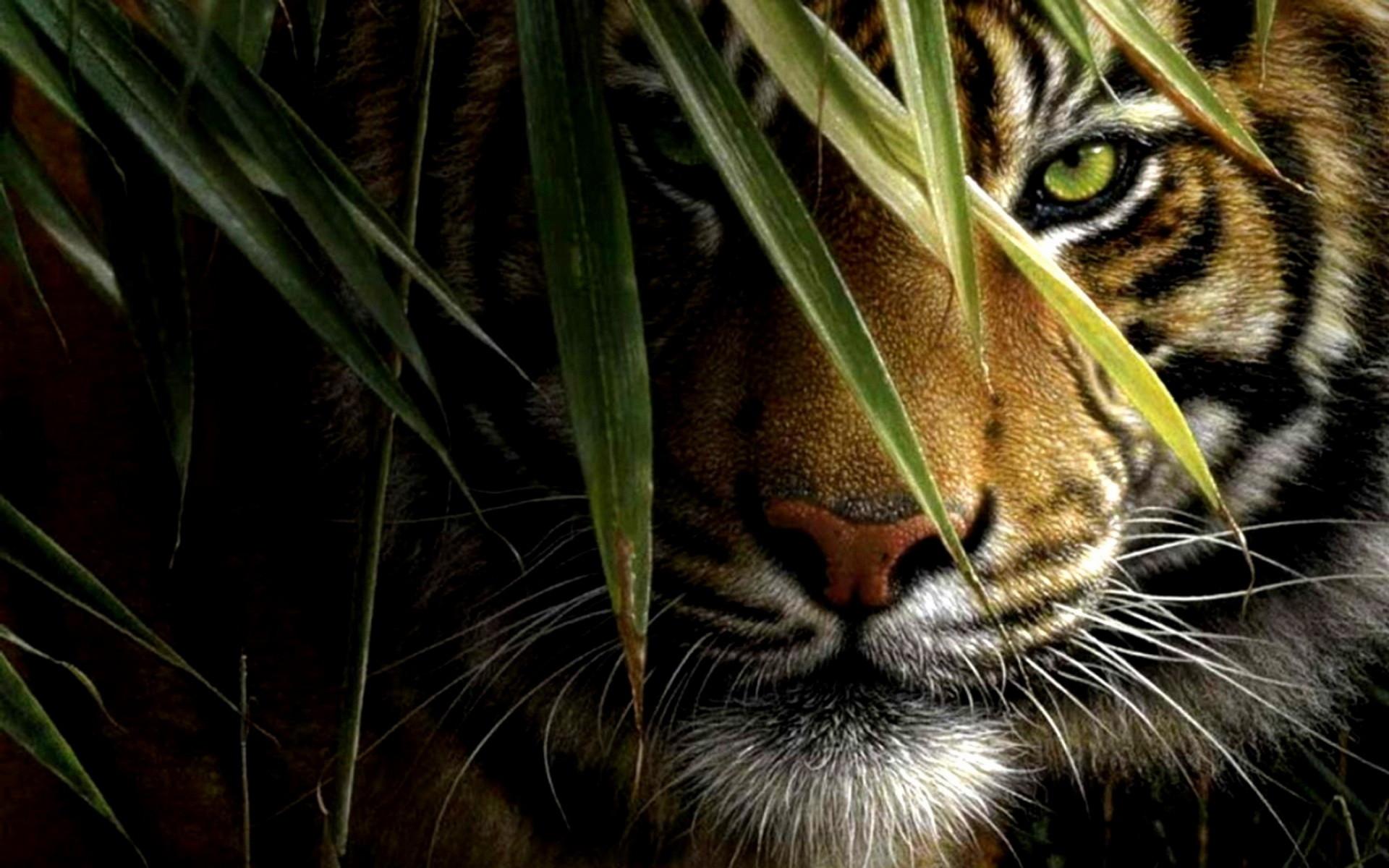 Cool tiger wallpaper
