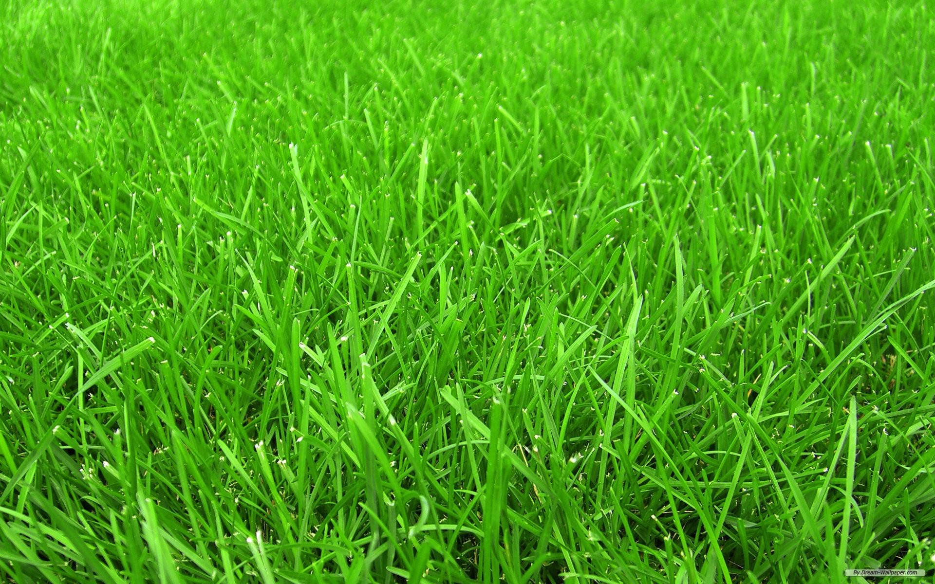 Grass background &#183...