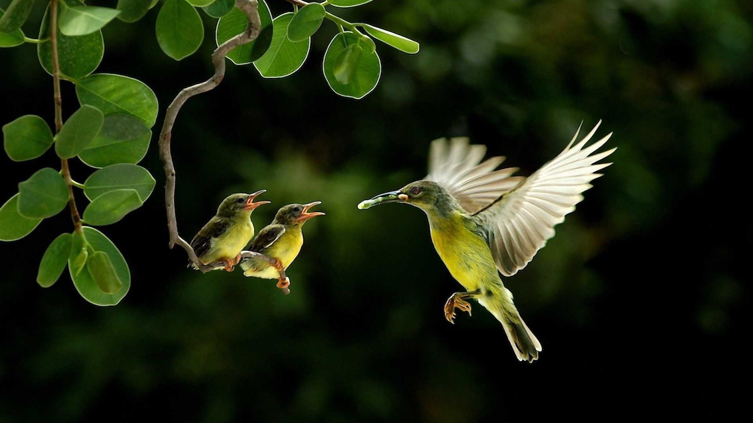 humming bird wallpaper