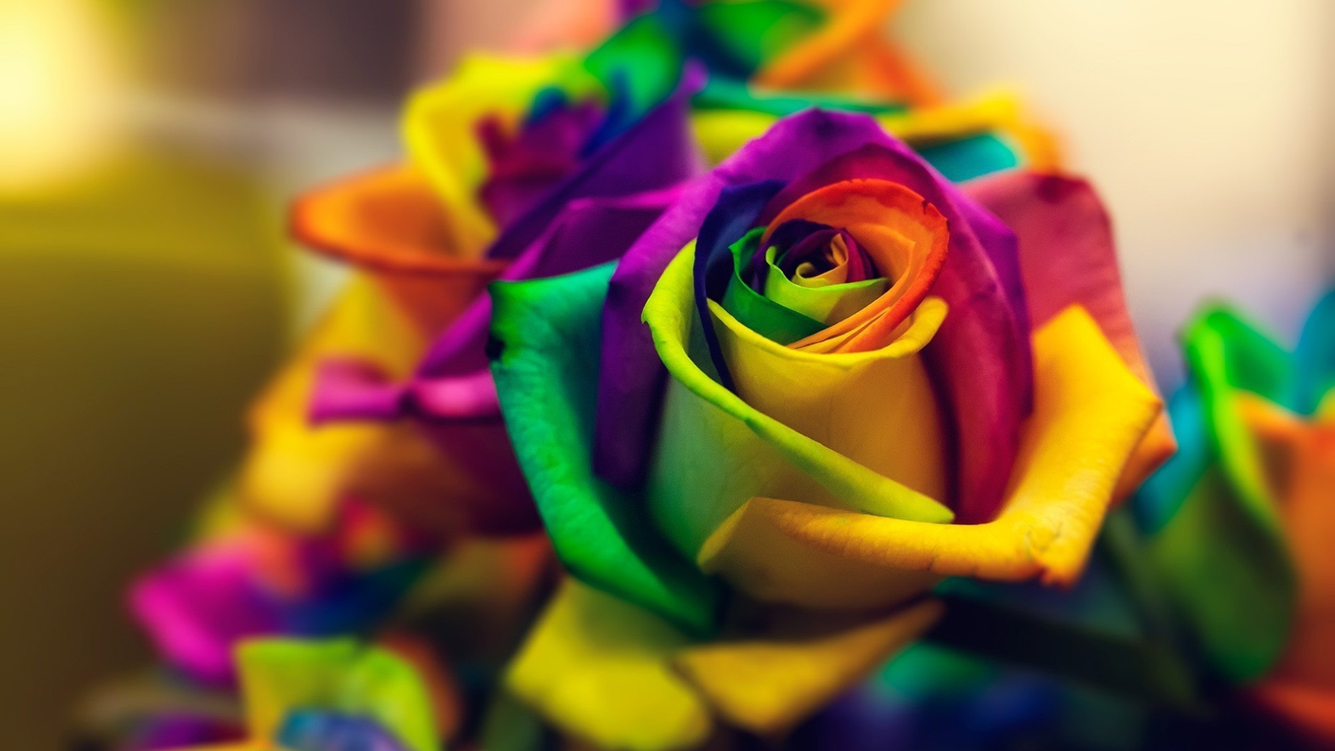 Rainbow Roses Background ·① WallpaperTag