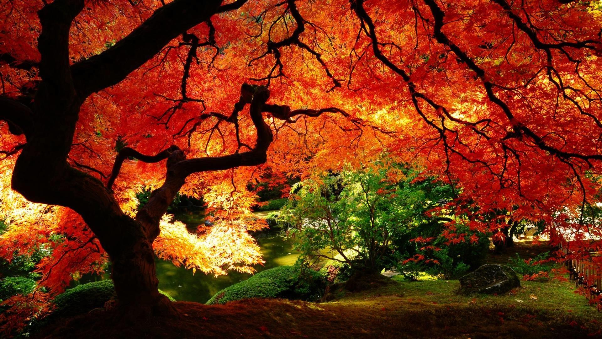 Desktop Wallpaper Fall Scenes ·â'