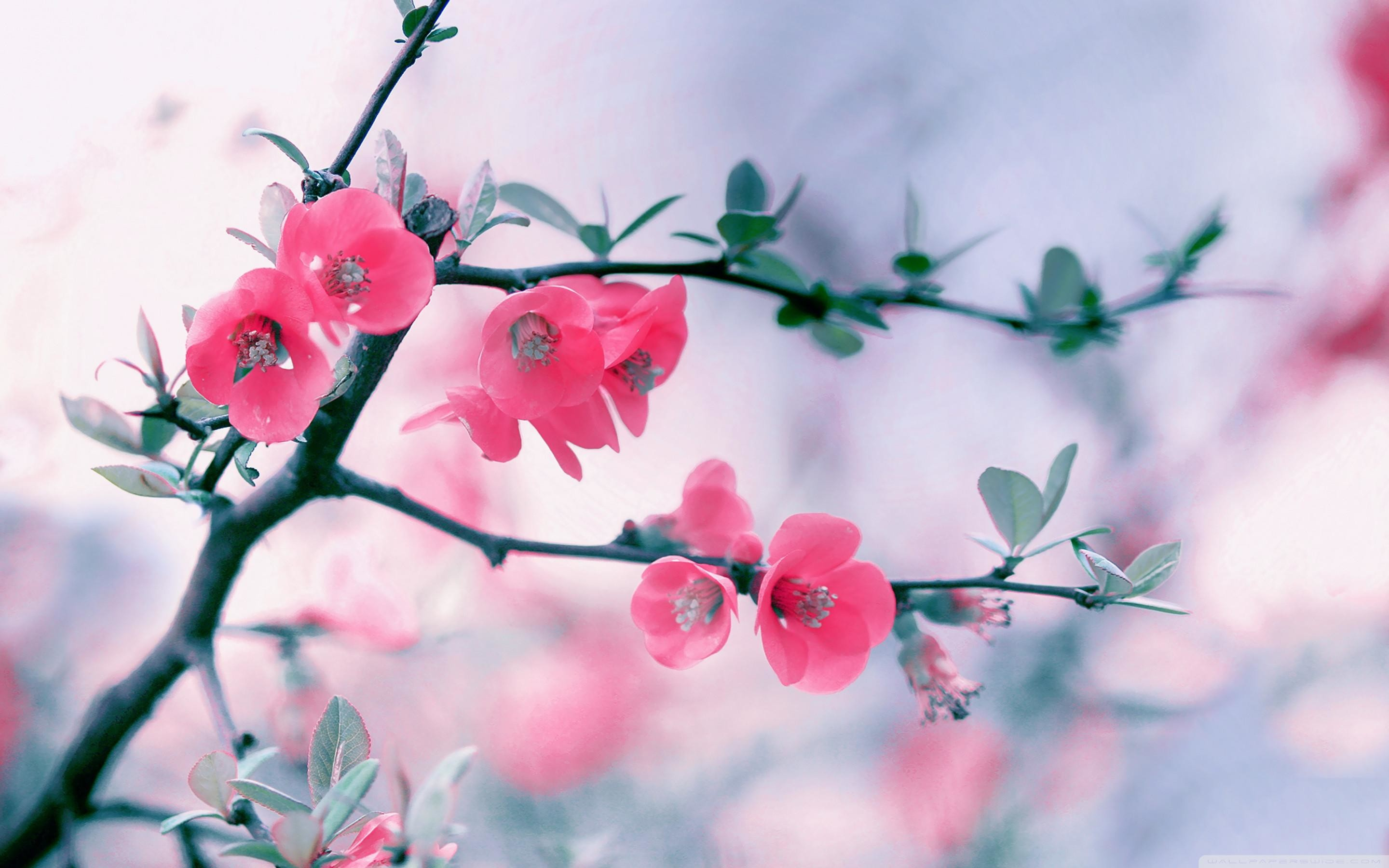 Pictures Of Flowers For Desktop Background