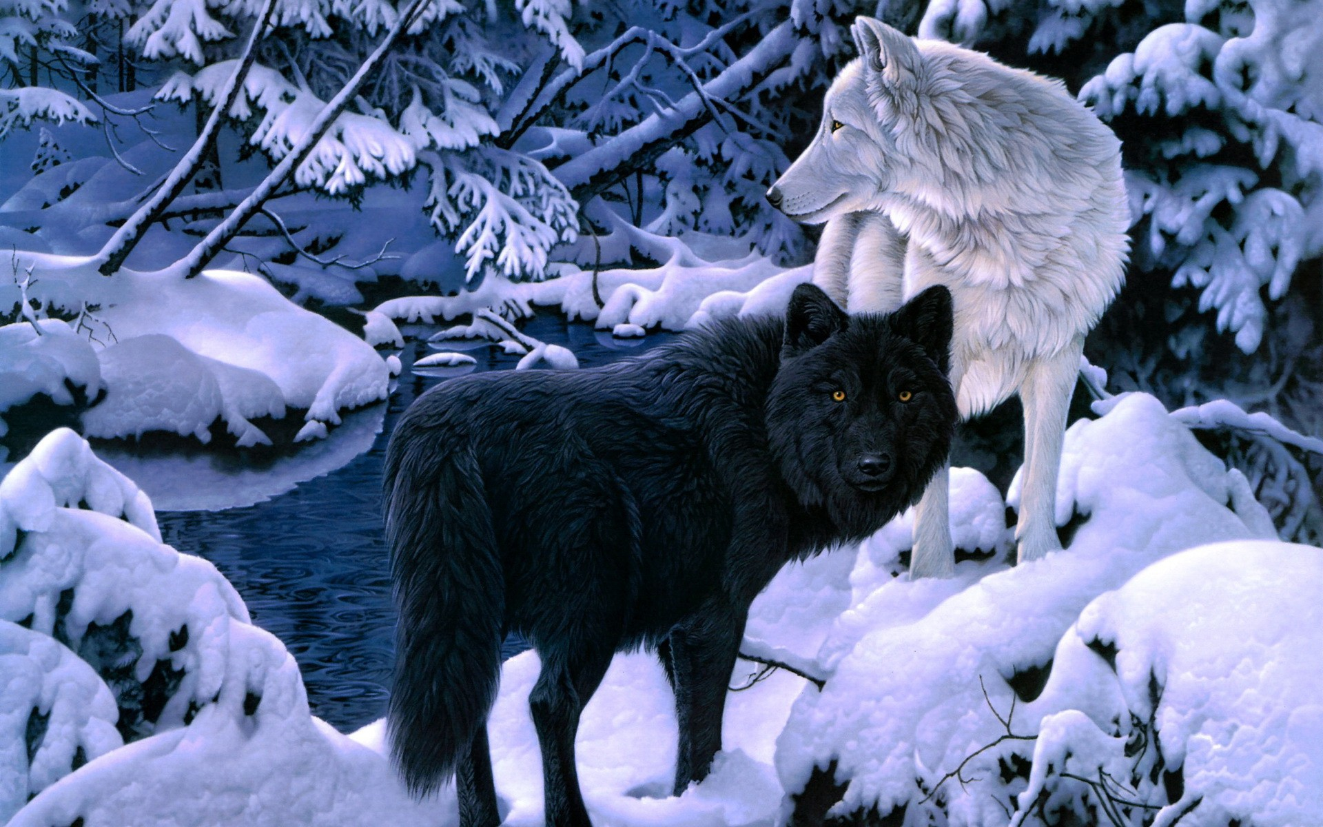 46+ Wolf Wallpapers ·① Download Free Stunning HD
