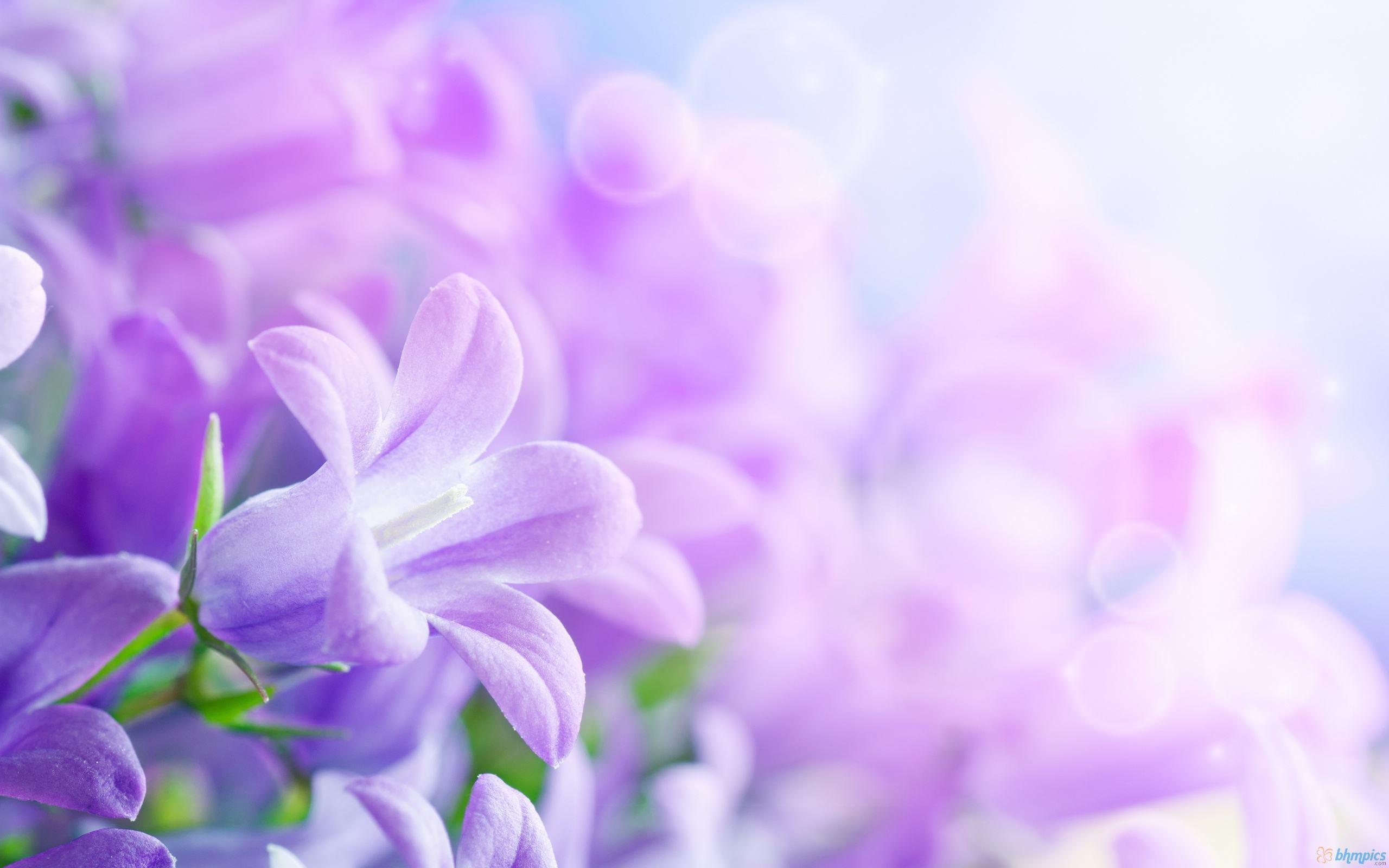 Purple Flower Backgrounds Wallpapertag