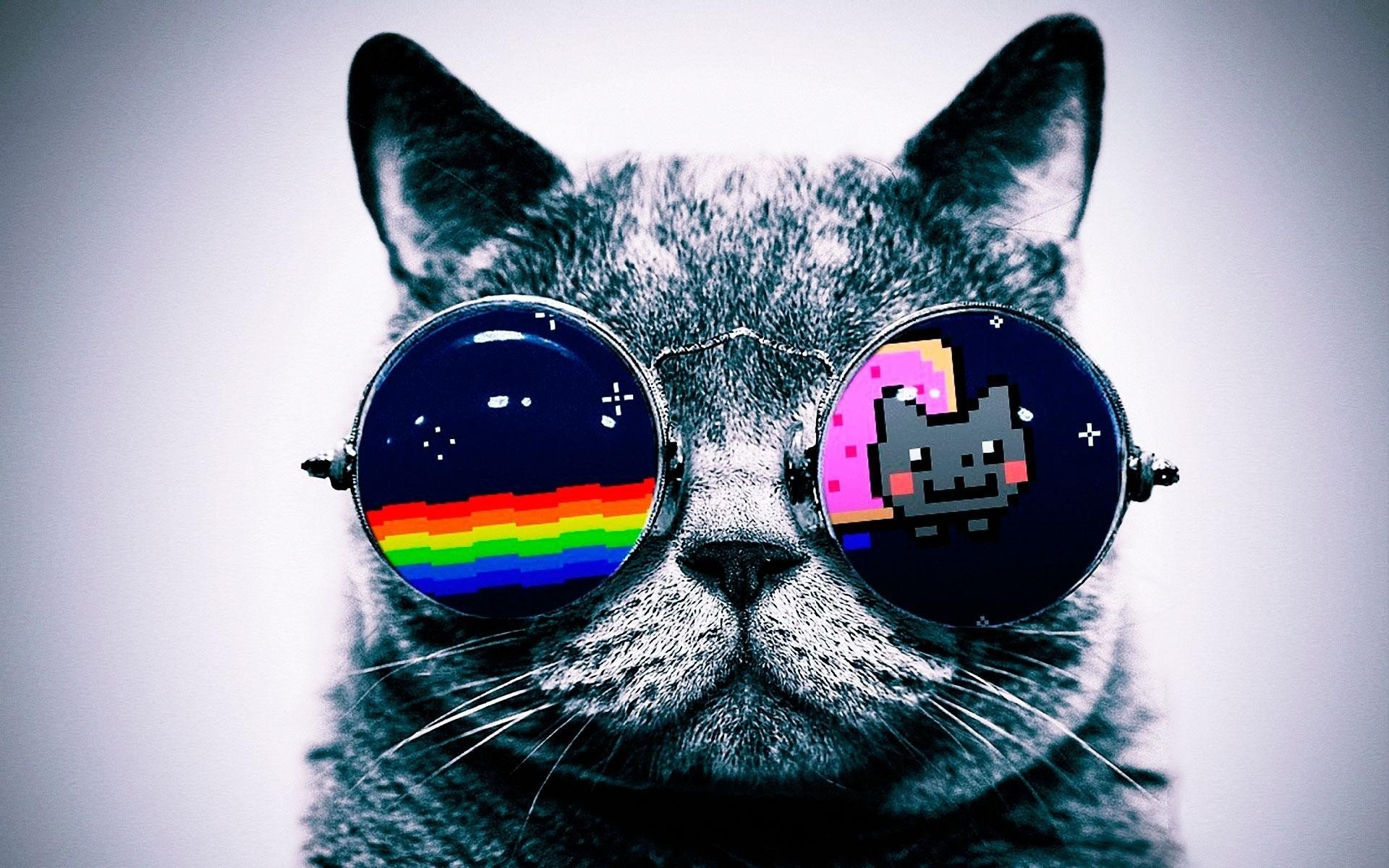 Cool Cat Backgrounds ·① WallpaperTag