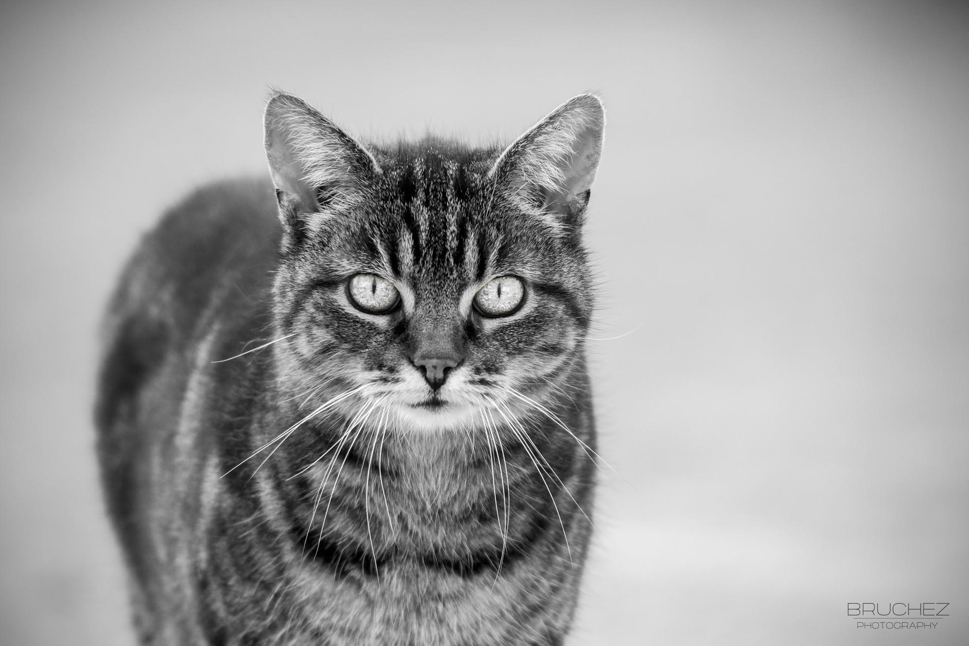 Black And White Cat Wallpaper 183 ① Wallpapertag