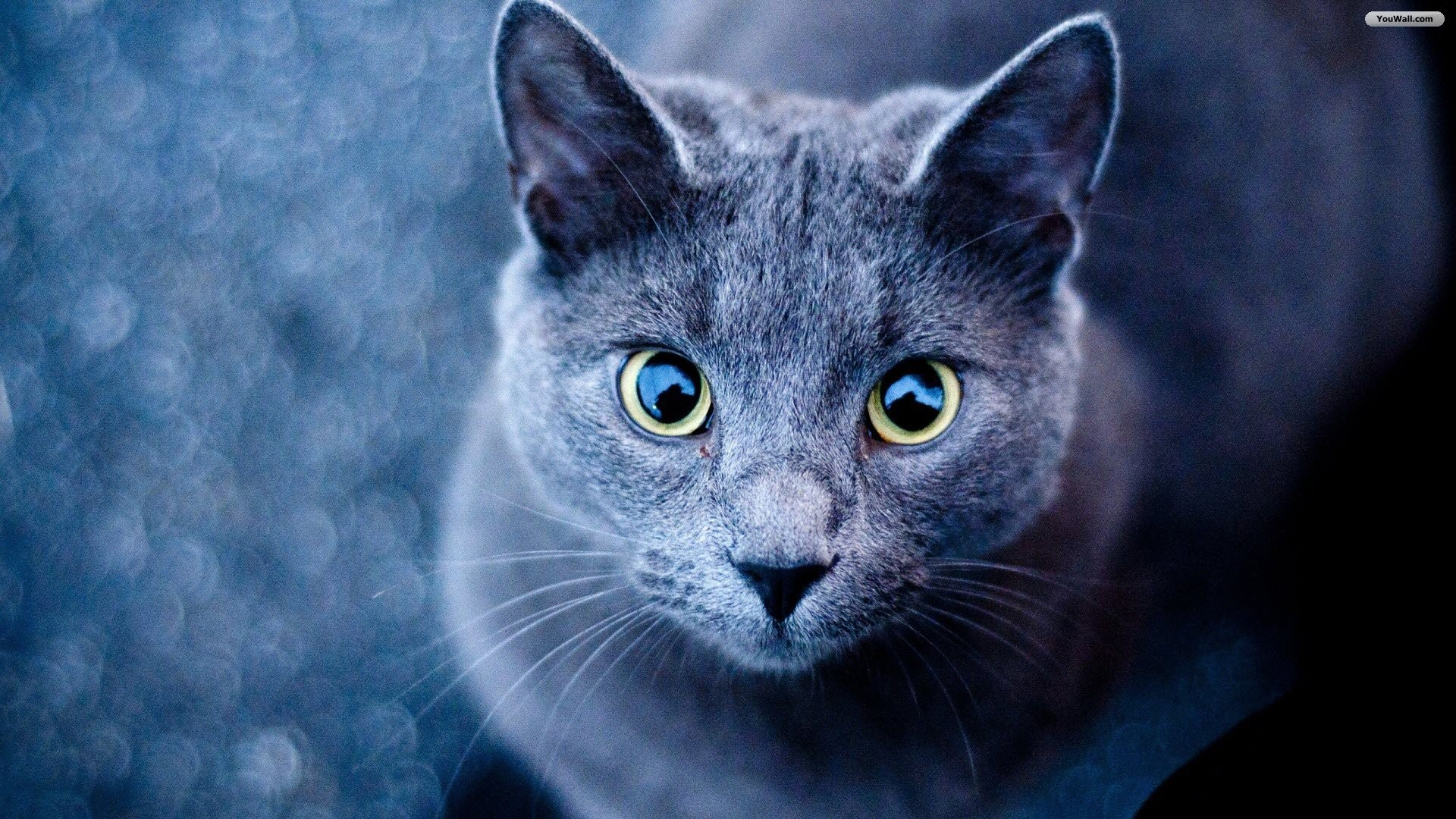 Warrior cats backgrounds wallpapertag - Cute kitten wallpaper free download ...