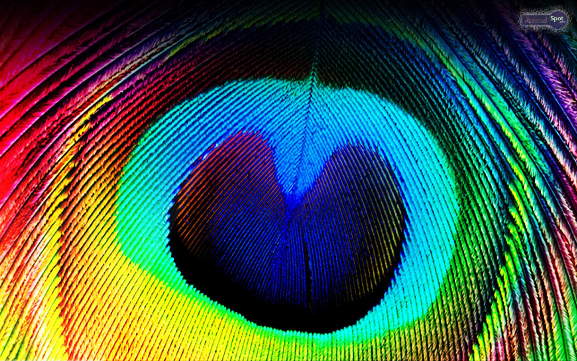 Peacock Feather Desktop Wallpaper Peacock Feather...