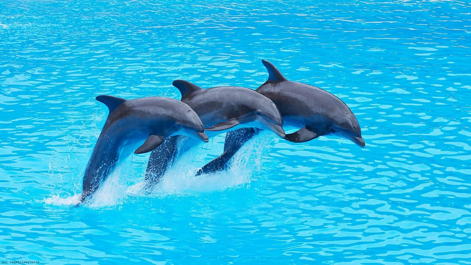 Dolphin Wallpapers For Desktop ·① WallpaperTag