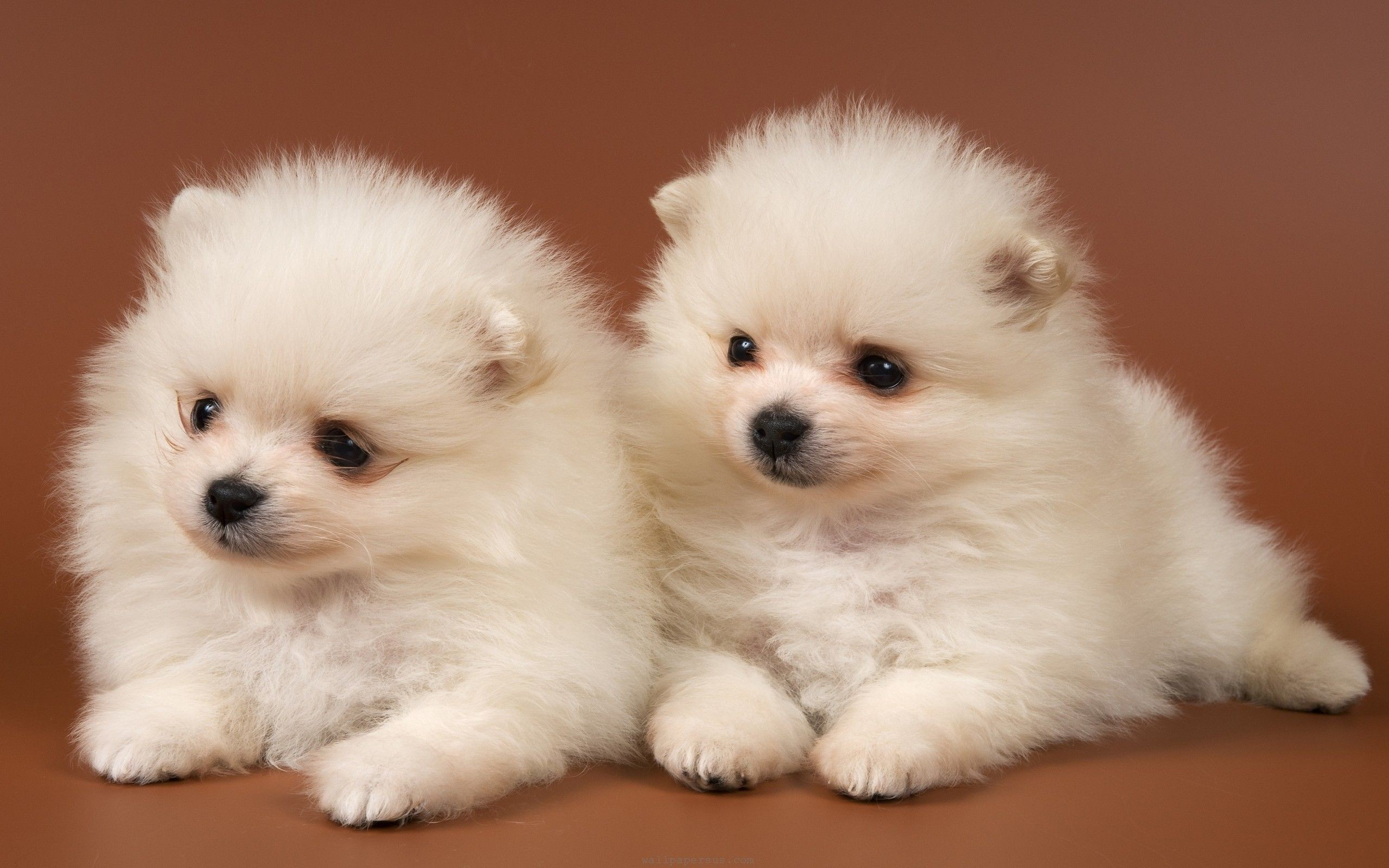 2560x1600 ... Cute Dogs And Puppies Wallpapers Wallpaper Cave Cute Puppy Wallpaper · Download