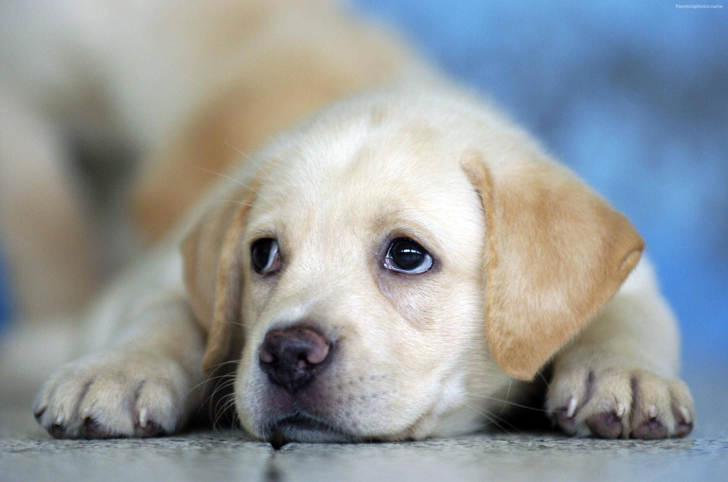 Dogs And Puppies Wallpaper Cute Dogs and Puppies ...