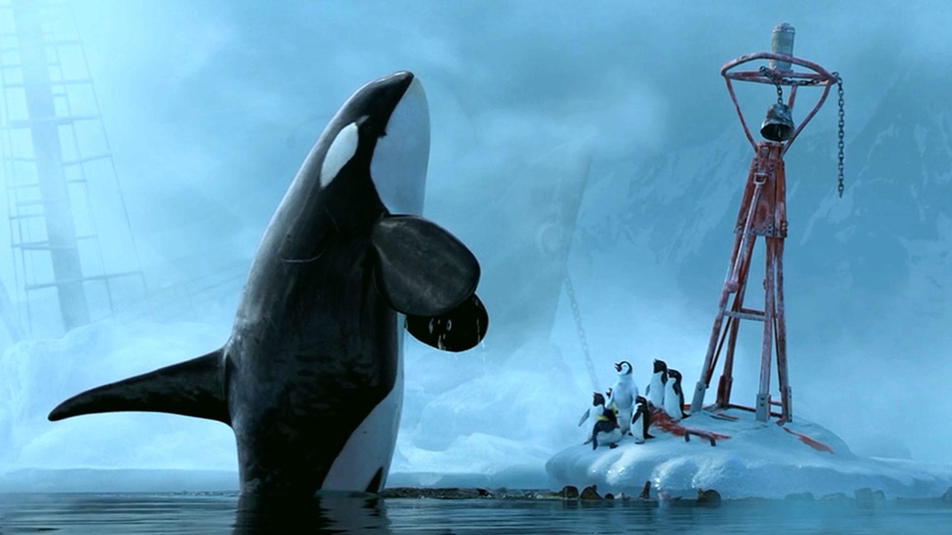 killer whale attacks - HD1920×1080